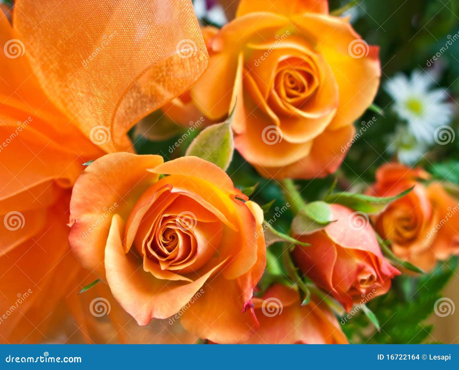 orange rosen stockfoto bild von abschlu sch nheit 16722164. Black Bedroom Furniture Sets. Home Design Ideas