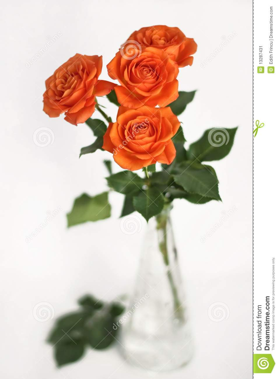 Orange roses in a vase stock image image of decorations 13287431 orange roses in a vase floridaeventfo Choice Image
