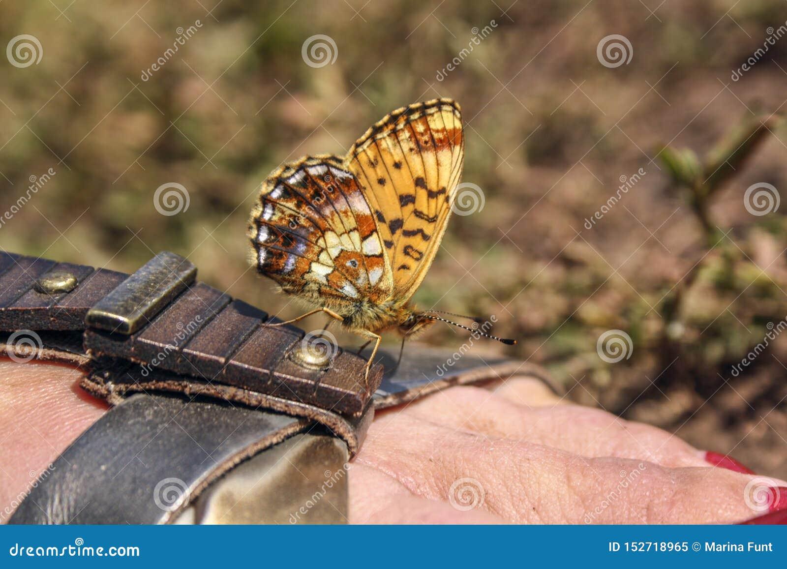 Orange Schmetterling sitzt auf einer braunen Sandale