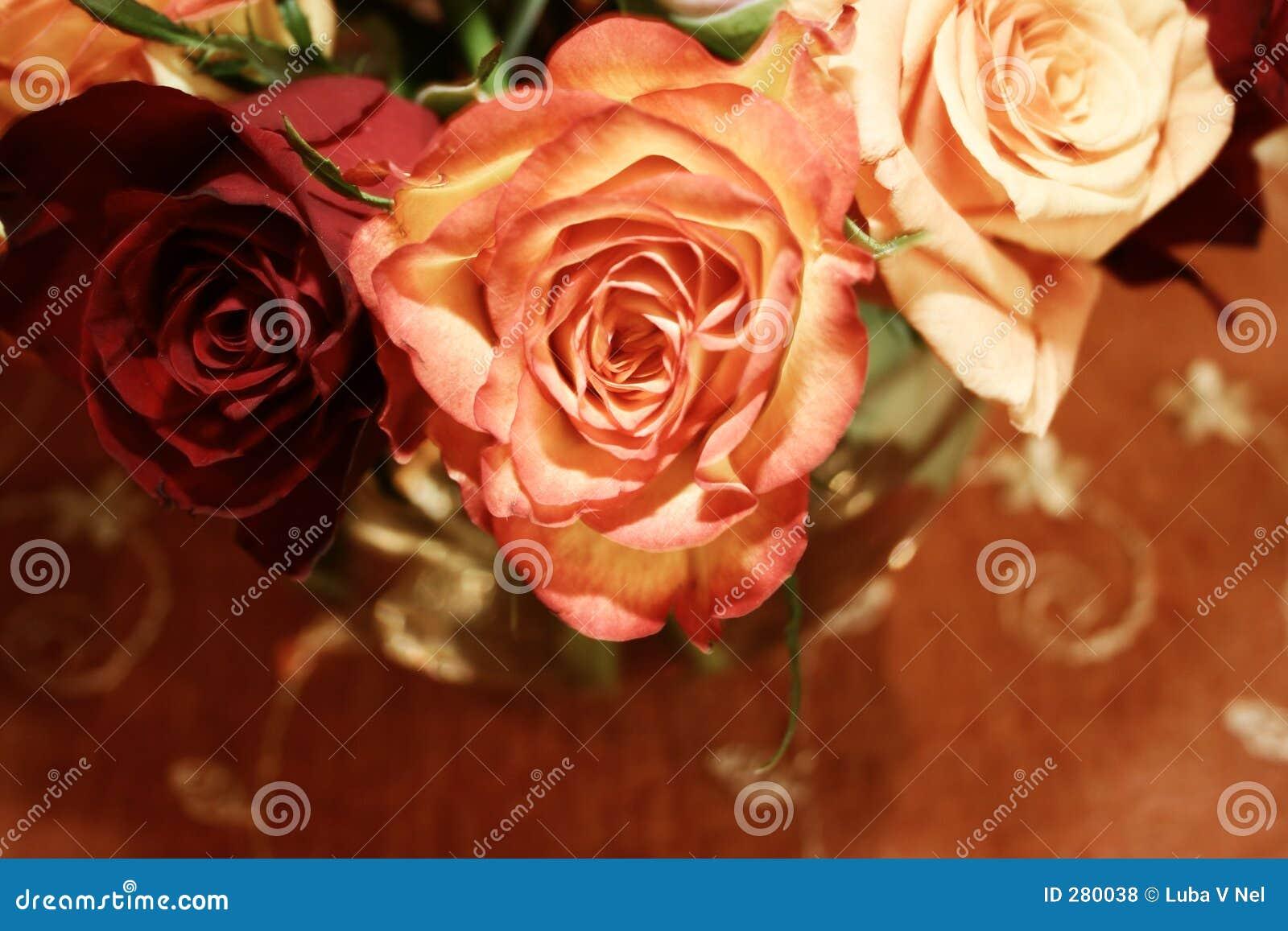 Orange siamesische Rosen 021