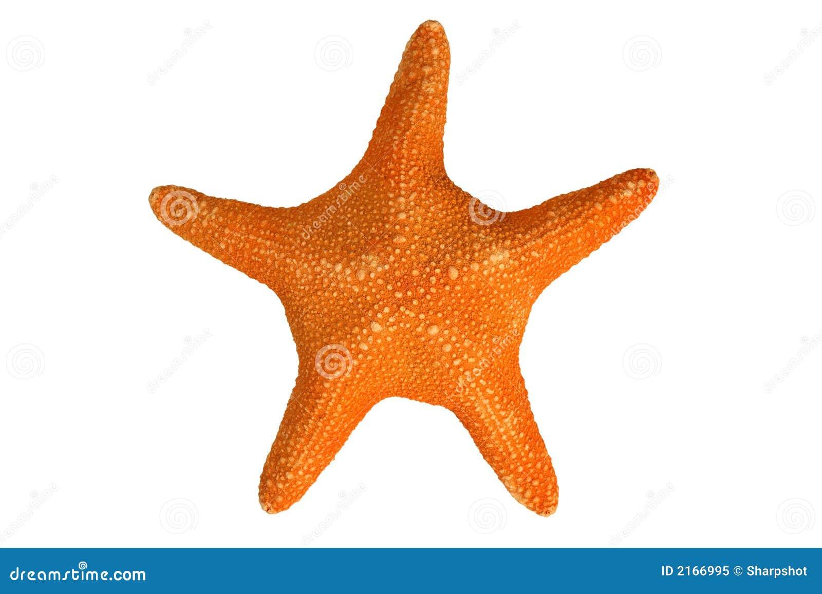 Orange sjöstjärna