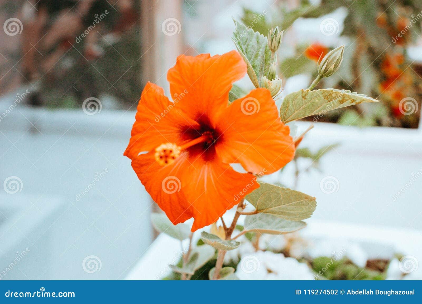 Orange Smooth Flowers In Garden Stock Photo Image Of Green Tree