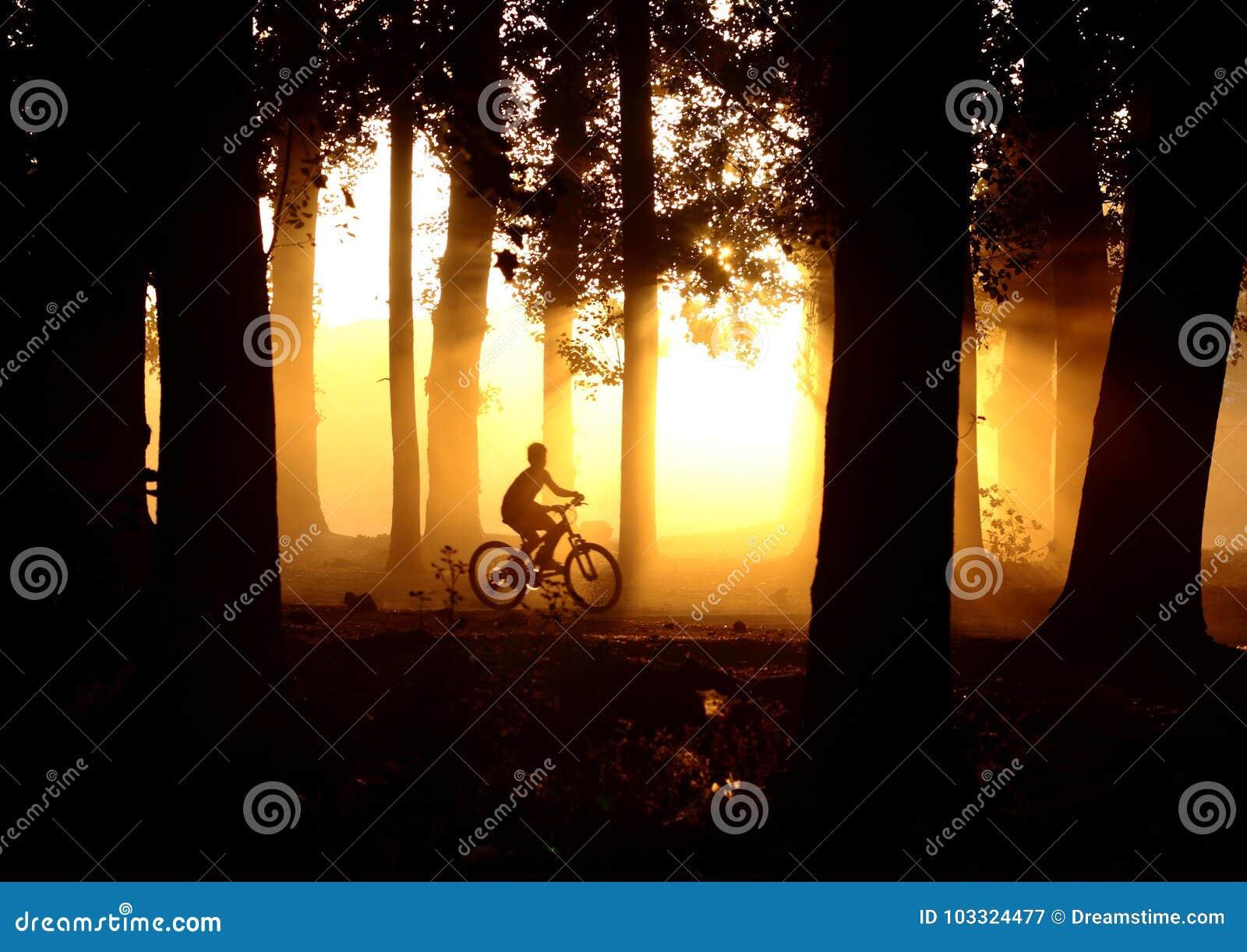 Orange Sonnenuntergang im Wald