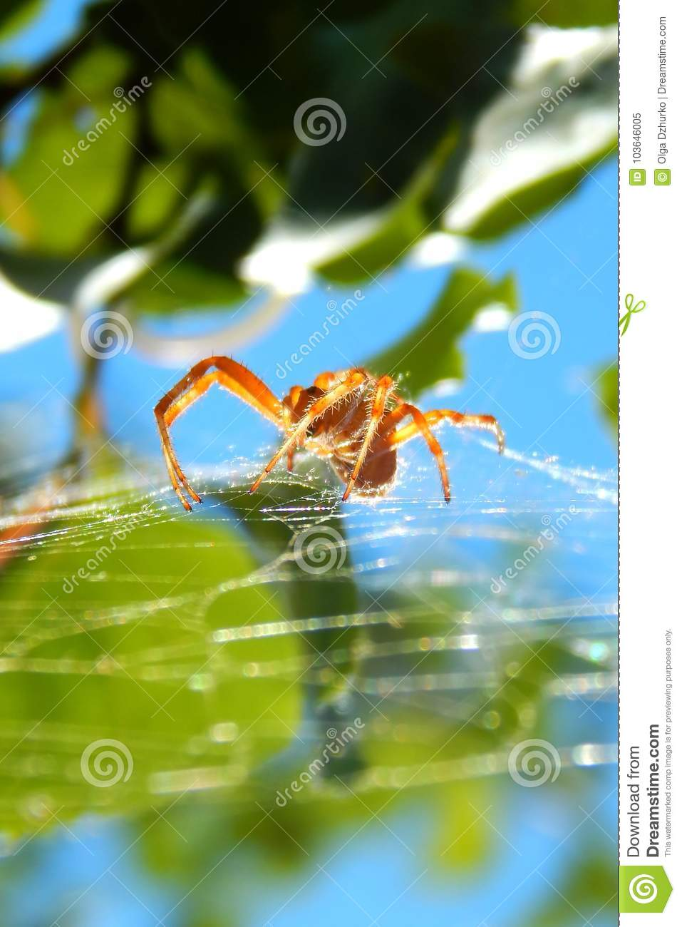 2orange spider on web. on background of green leaves and blue sky