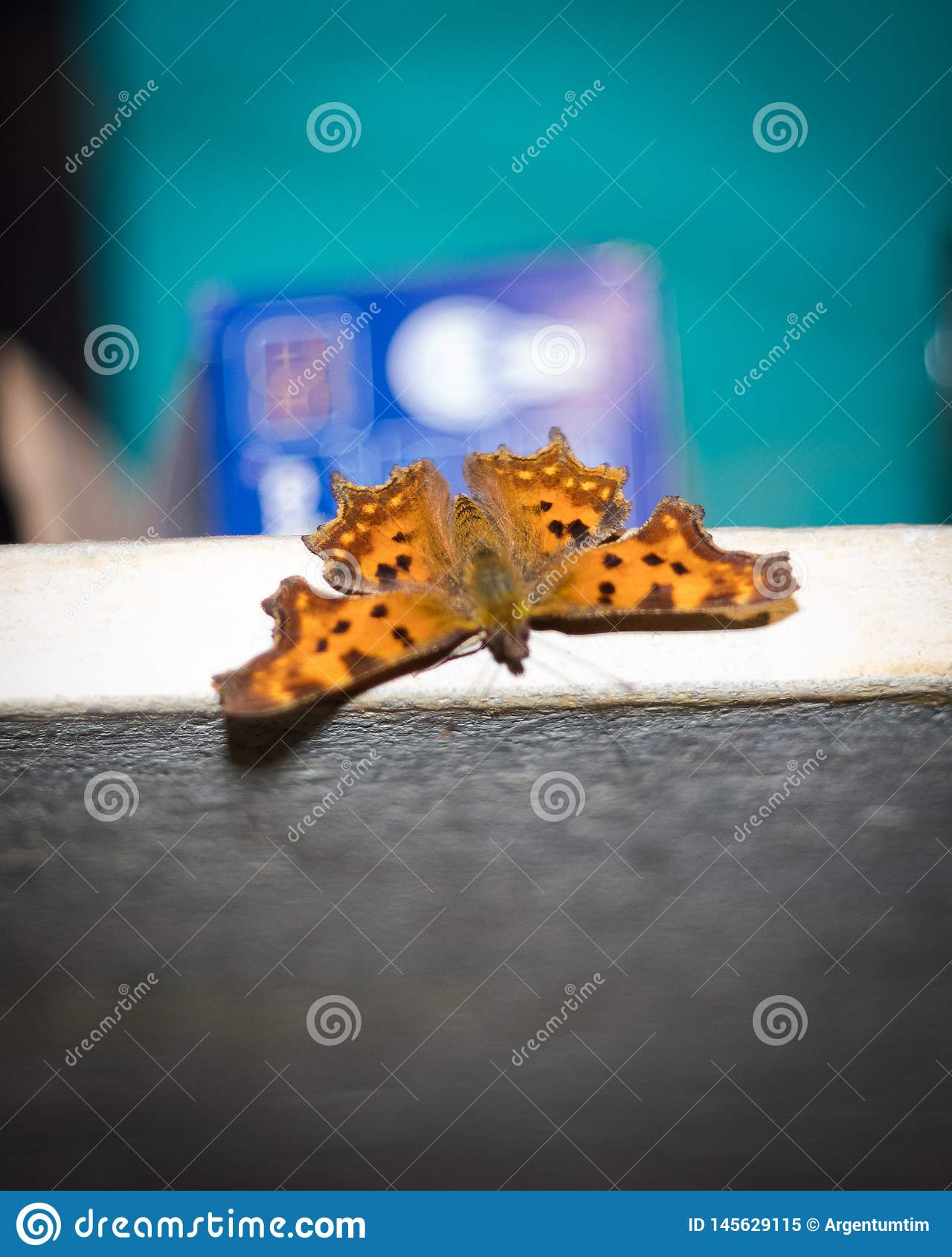 Orange spotted butterfly sitting on the furniture indoors