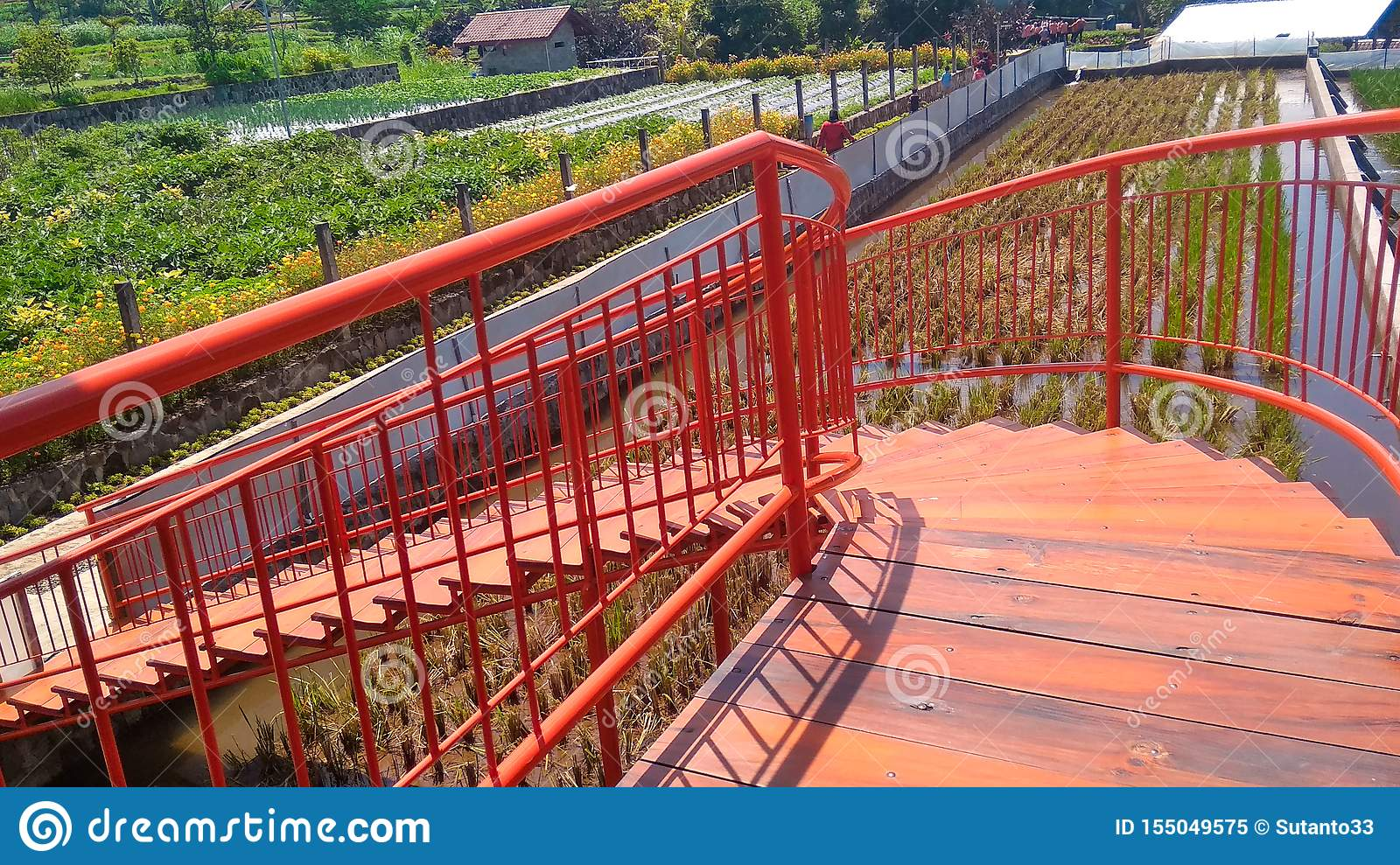 Orange stairs above the rice fields
