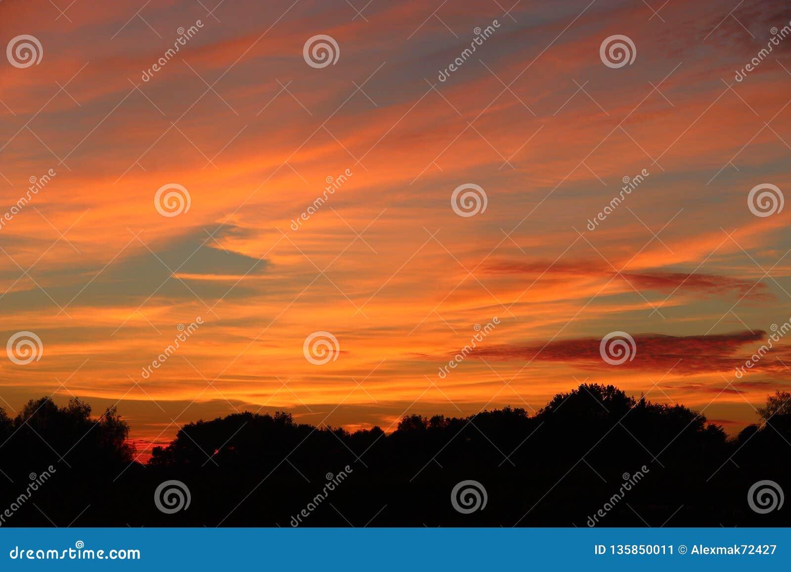 Orange sunset over trees. Twilight with bright sunset. Evening landscape