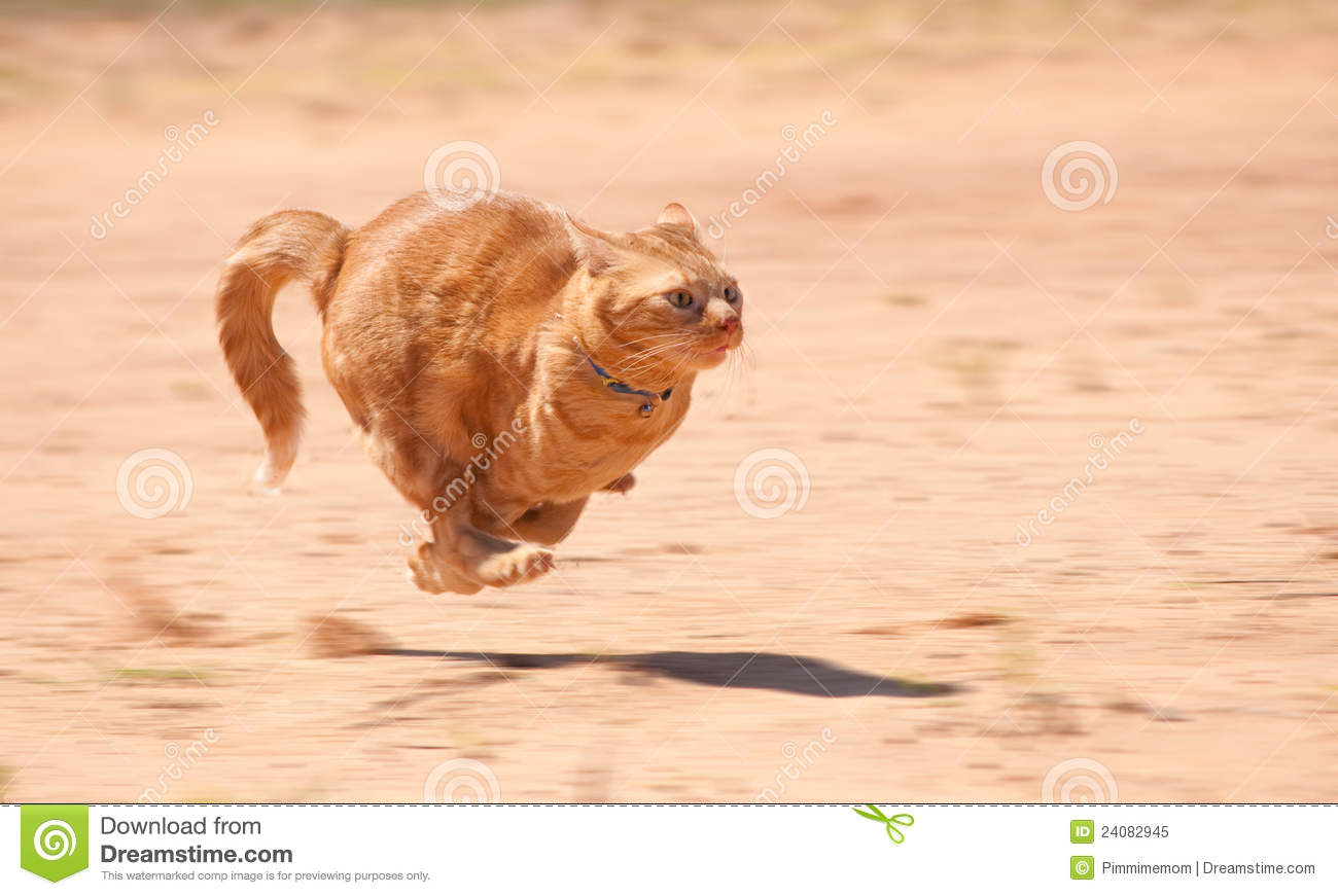 Orange tabby cat running full speed