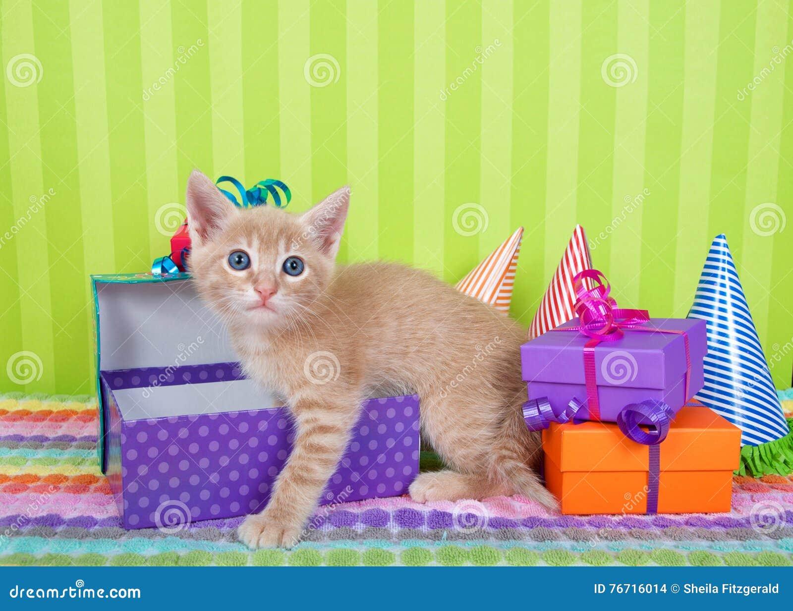 Orange Tabby Kitten Climbing Into Birthday Presents Stock Photo