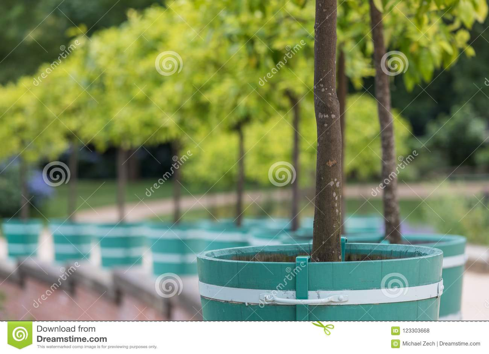 Orange träd i fuerstpueckleren parkerar i dålig muskau