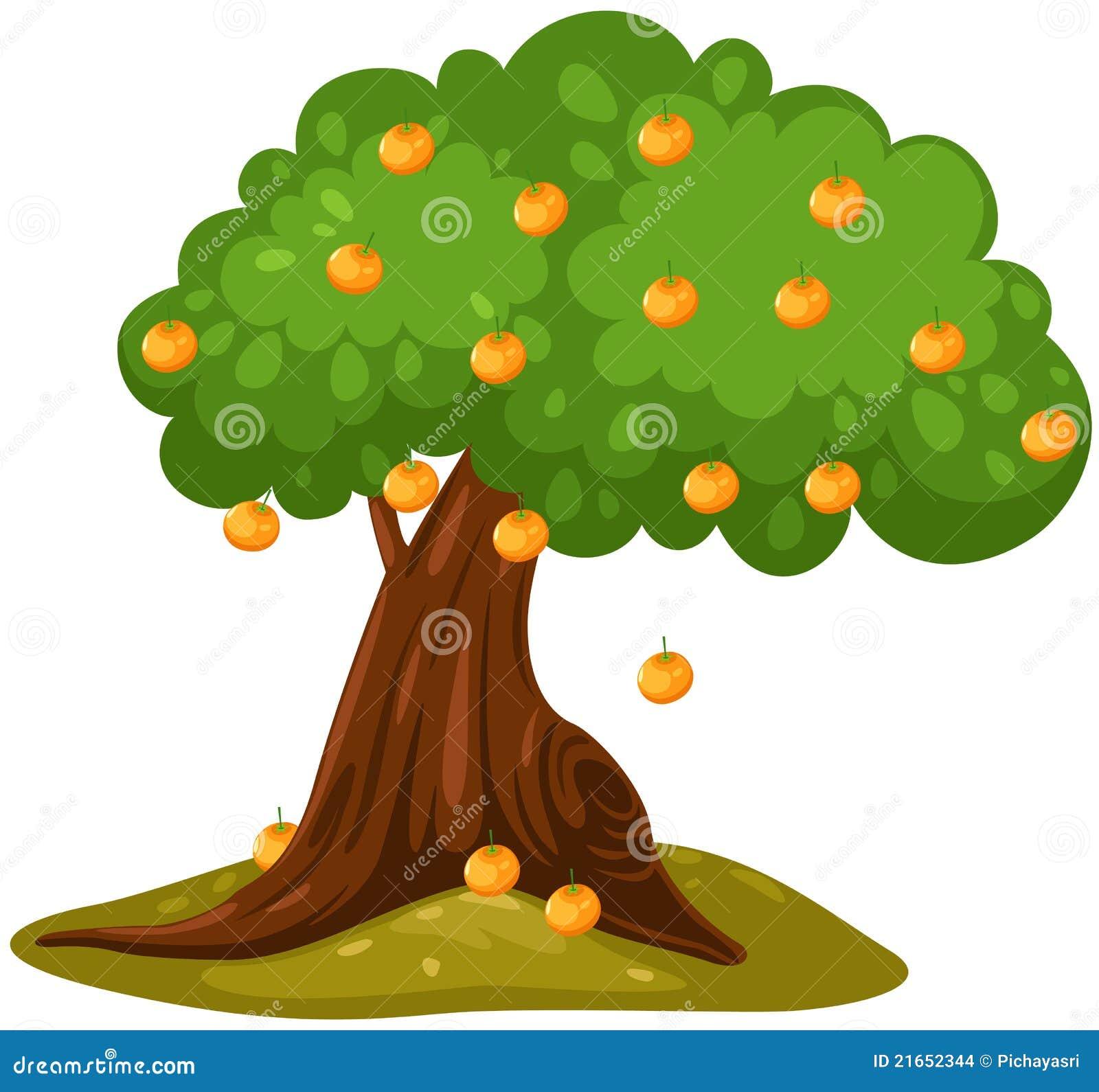 Orange tree stock vector. Illustration of fruit, forest ...
