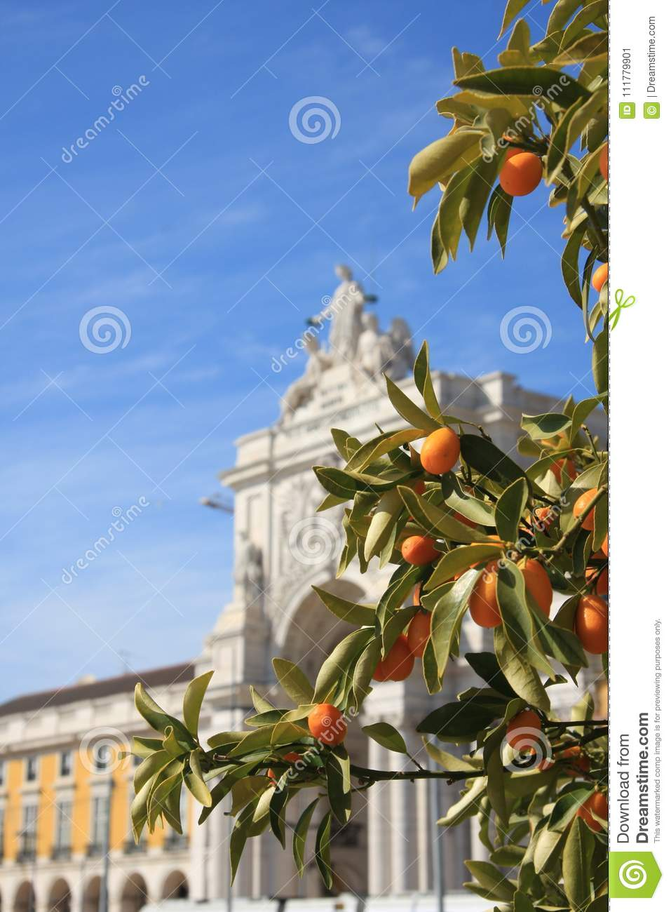 Orange tree on Commerce place in Lisbon, Portugal. Sunny day.