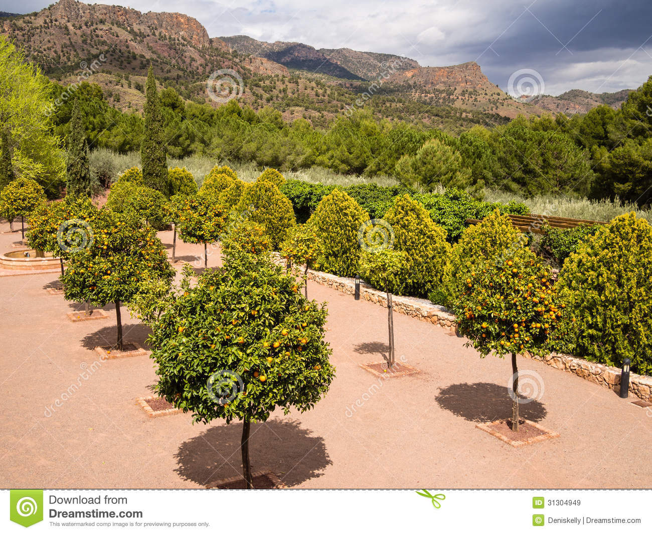 Awesome Royalty Free Stock Photo. Download Orange Tree Orchard Garden ...