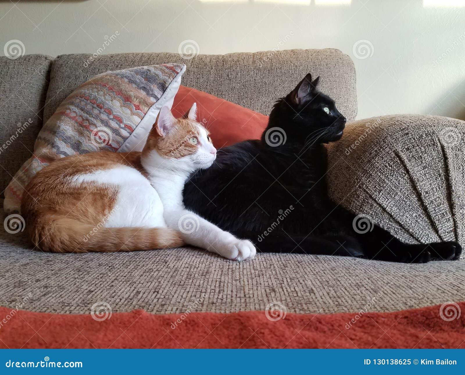 Cuddling Cats on sofa