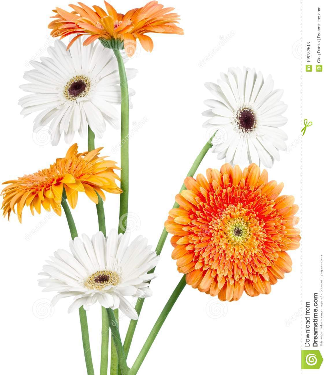 Orange And White Gerbera Daisies Stock Image Image Of Florist