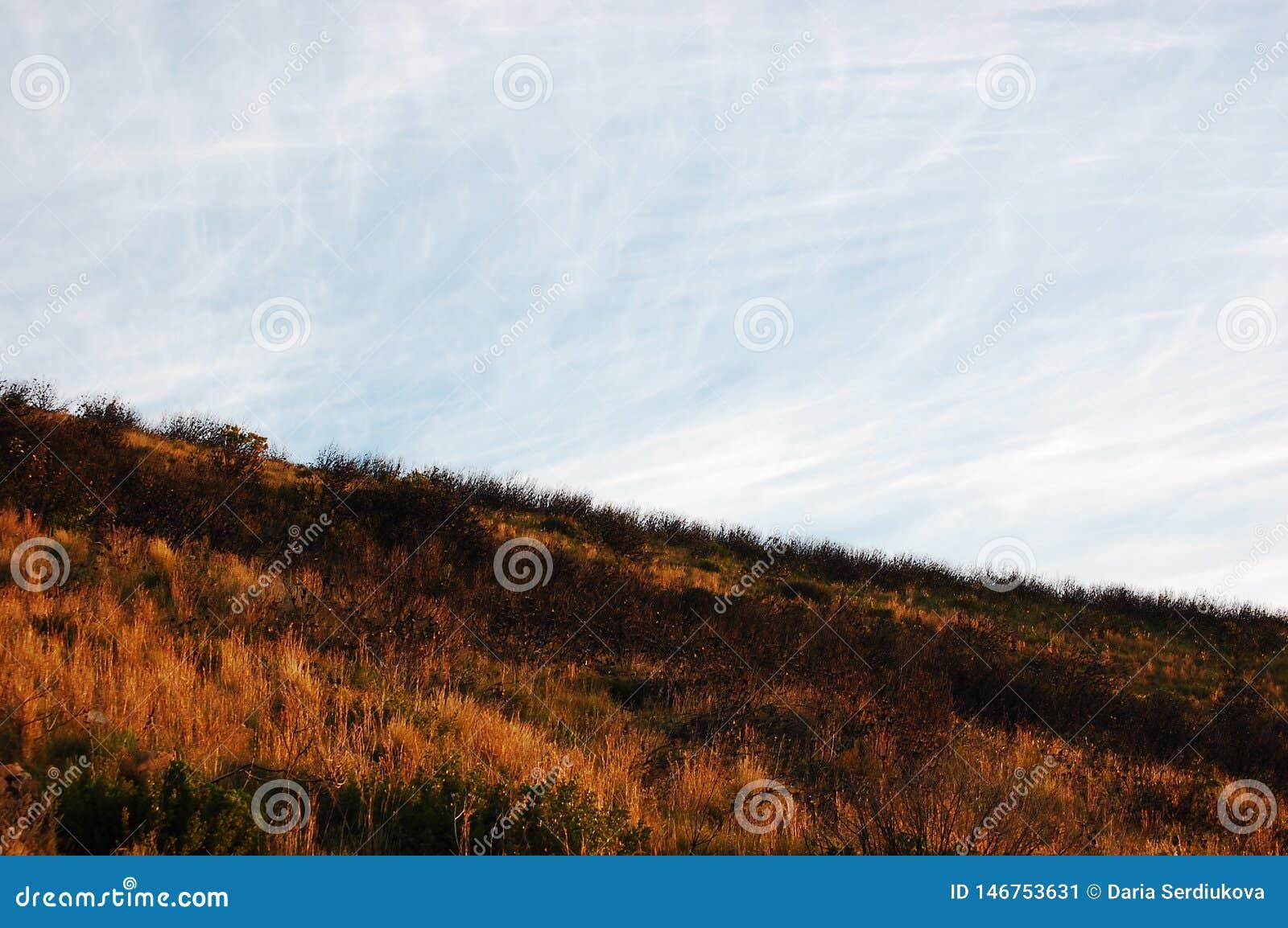 Orange wild grass on Table Mountain South Africa