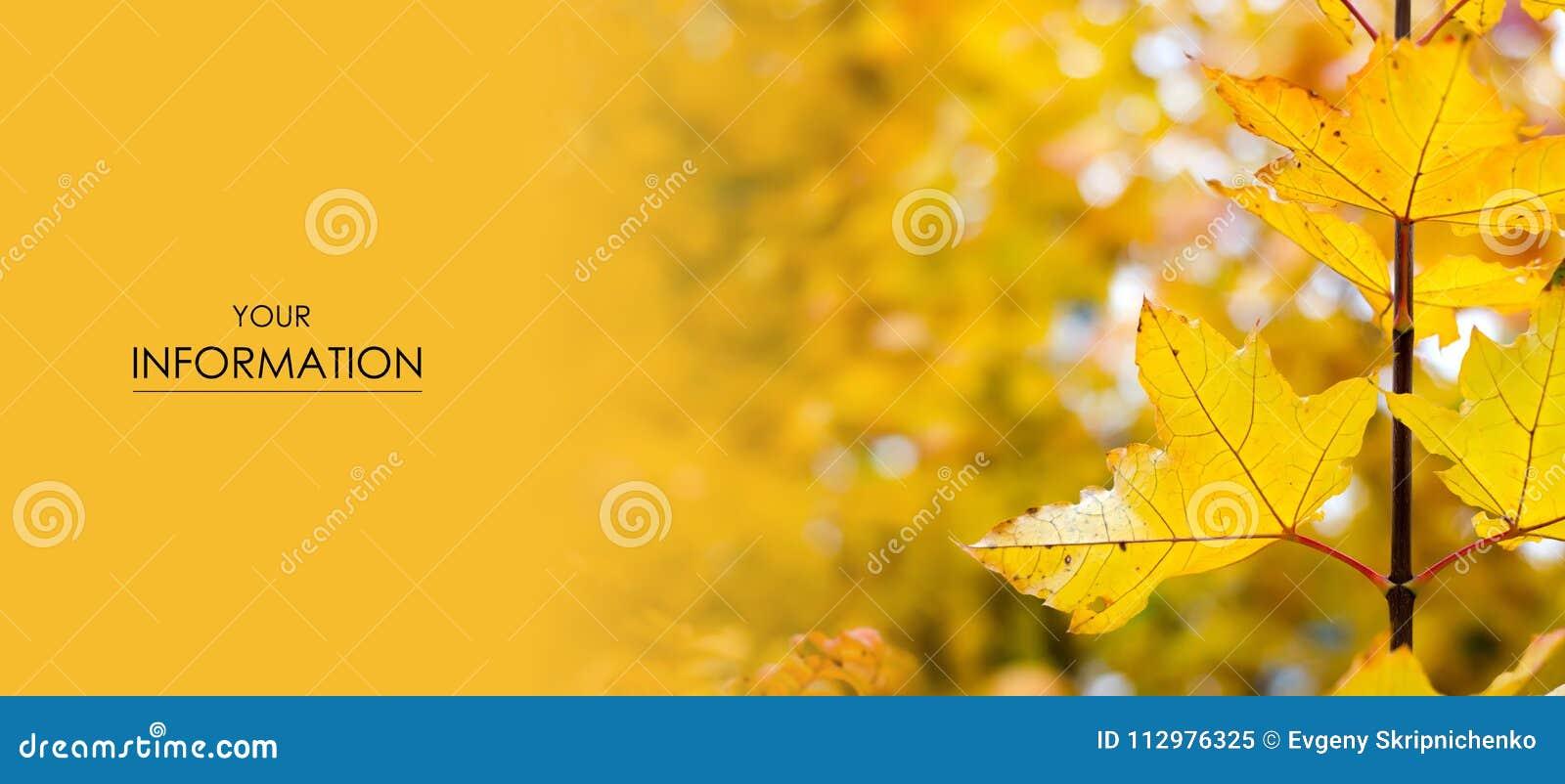 Orange yellow leaves autumn pattern