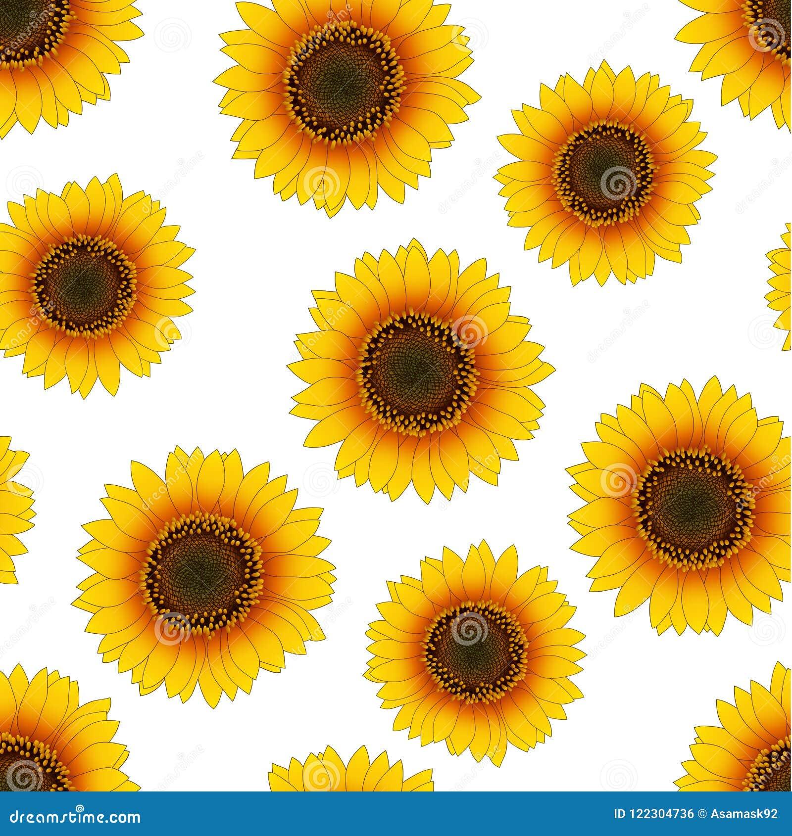 Orange Yellow Sunflower Seamless on White Background. Vector Illustration