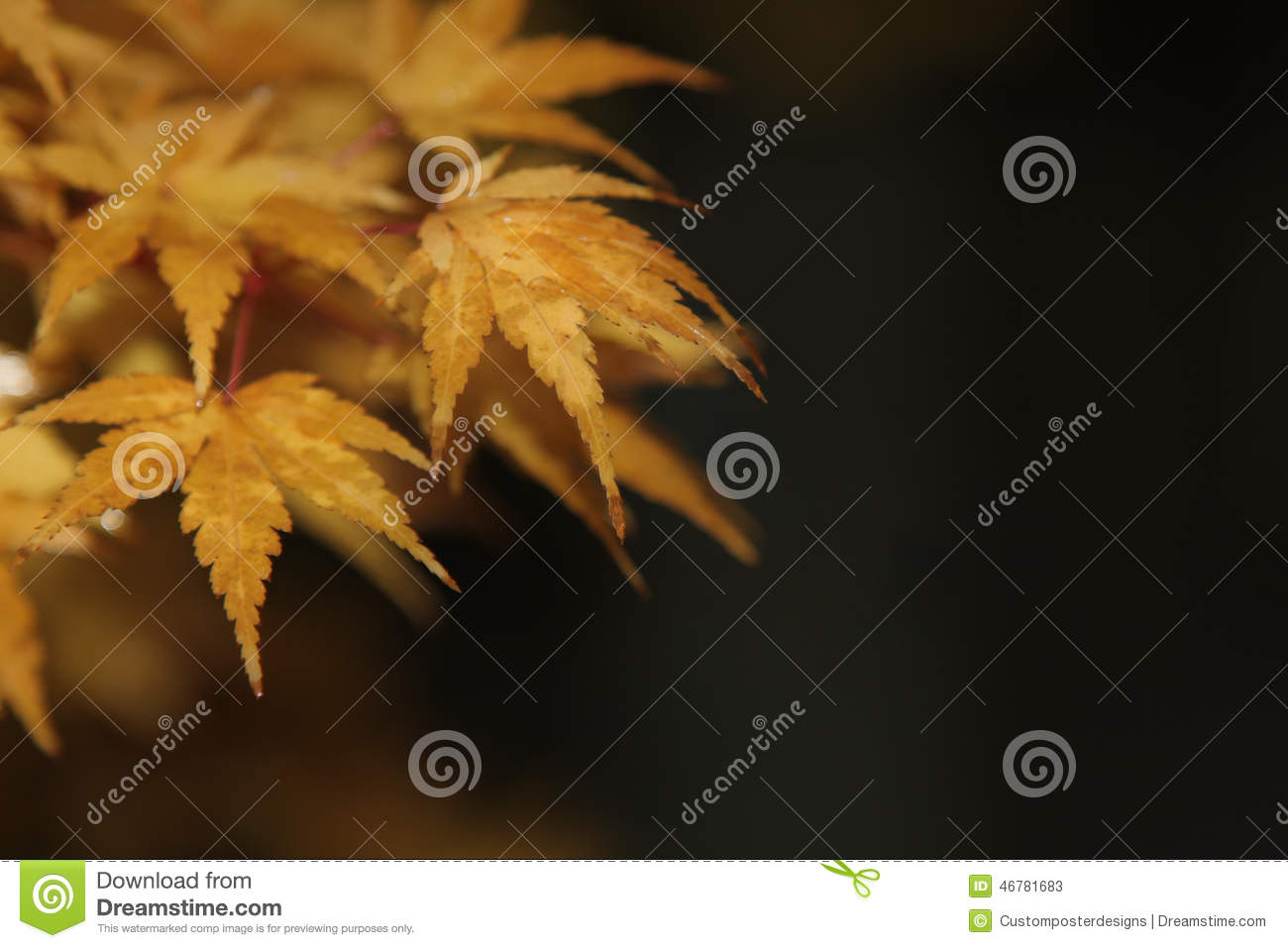 Download Orange And Yellow Tree Leaves With A Bokeh Background. Stock Image - Image of orange, japanese: 46781683