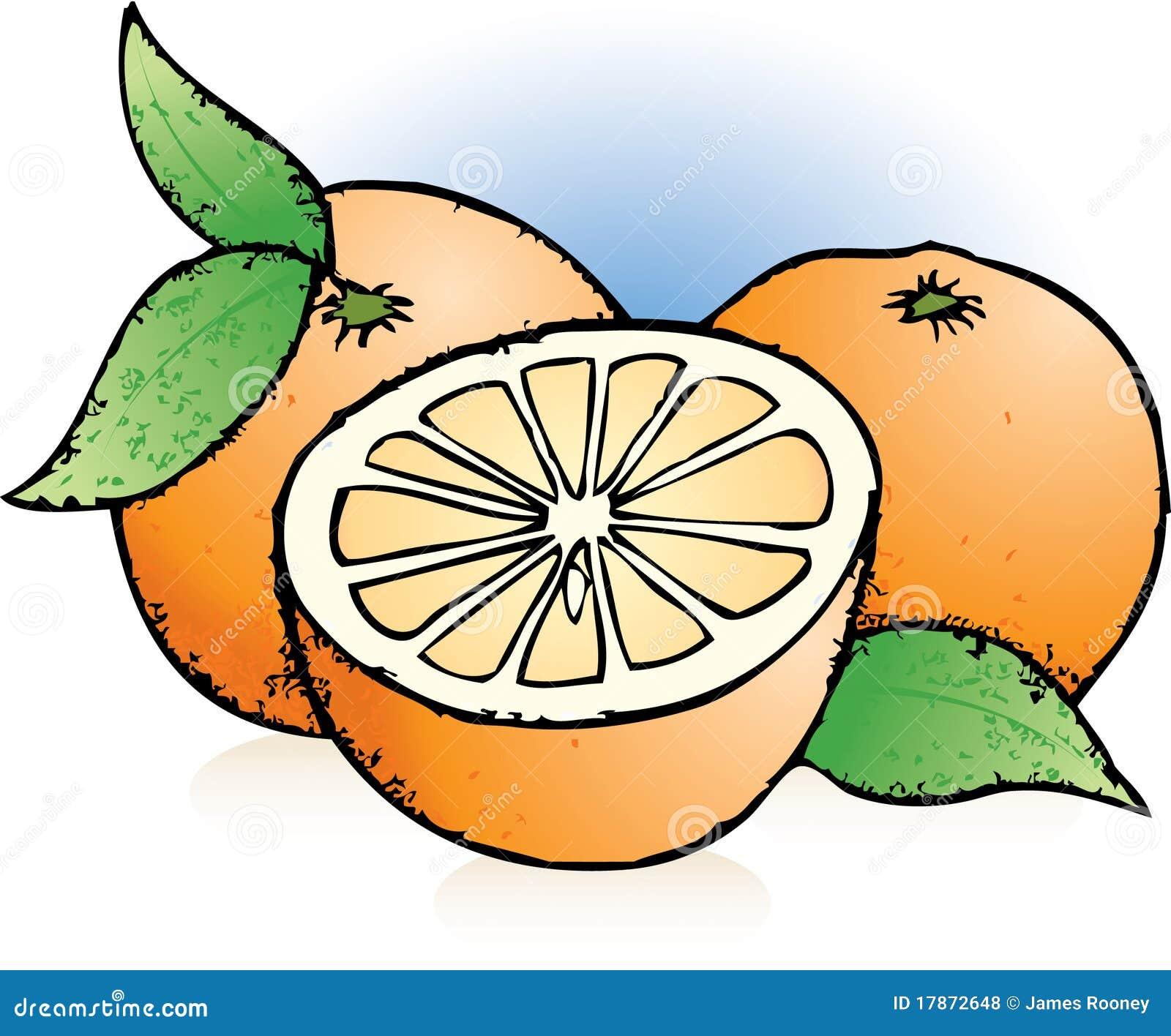 orangen skizze stock abbildung bild von zeichnung nachtisch 17872648. Black Bedroom Furniture Sets. Home Design Ideas