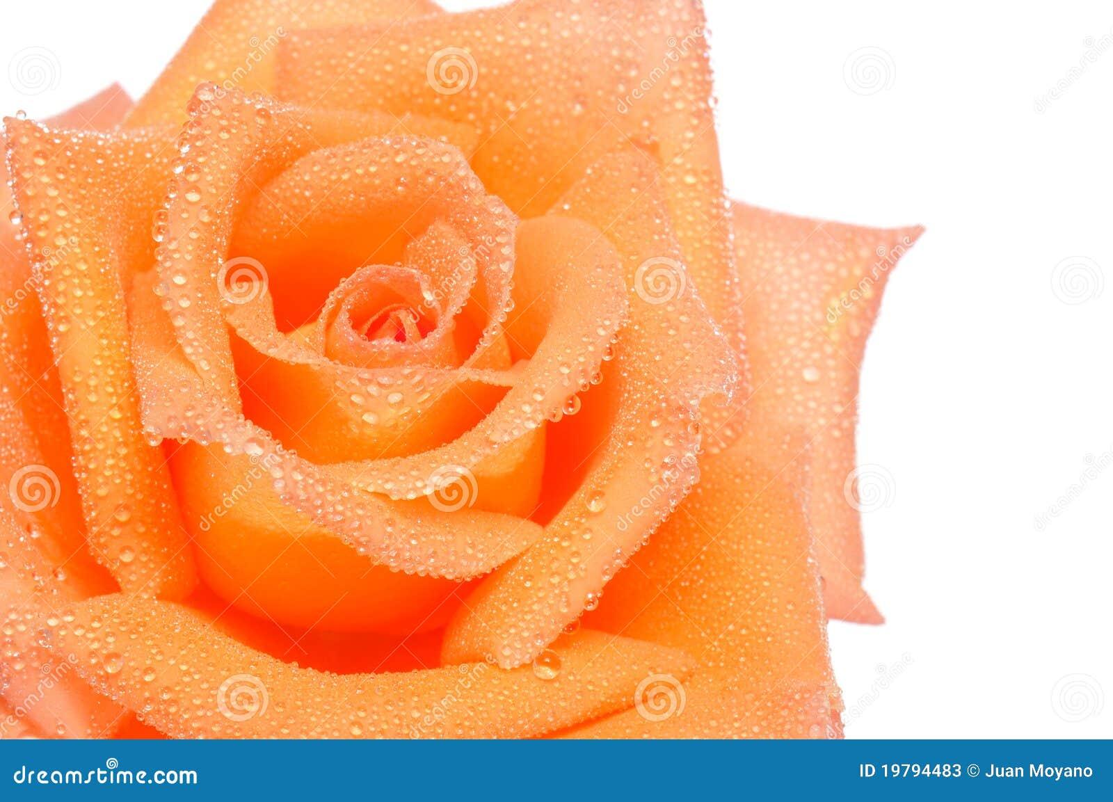 Orangen steg