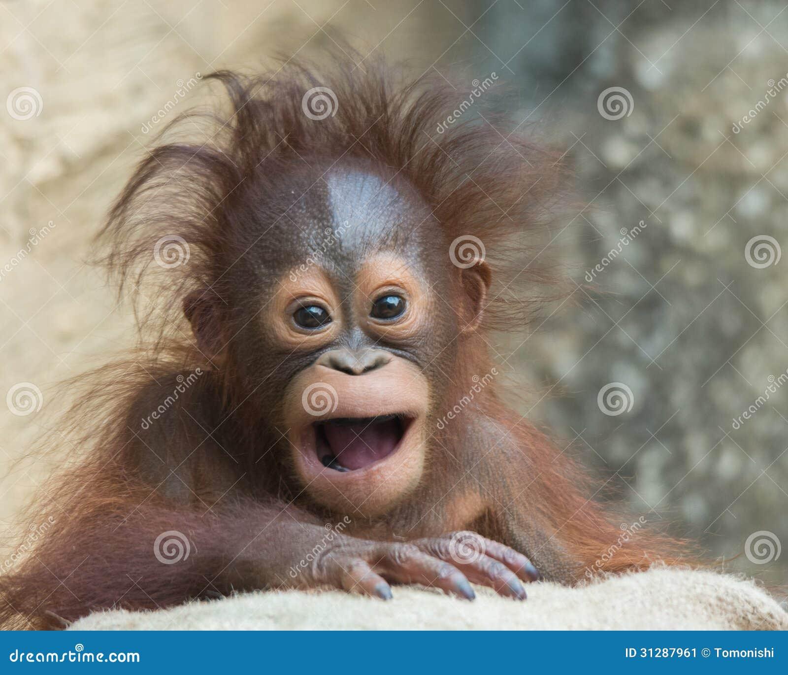 Smiling baby orangutan - photo#9