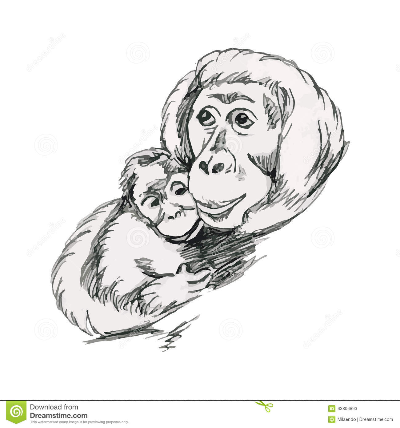 Line Drawing Monkey Face : Orangutans monkeys mother and cub stock vector image