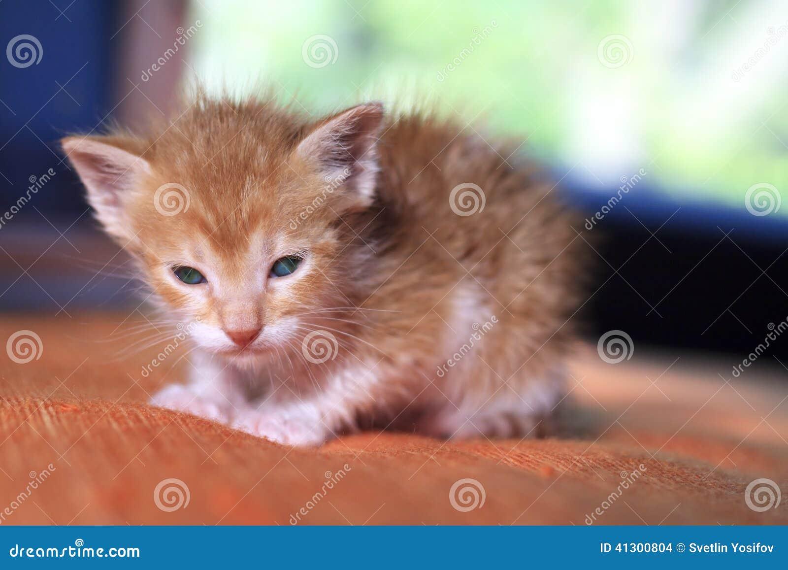 Oranje babykatje