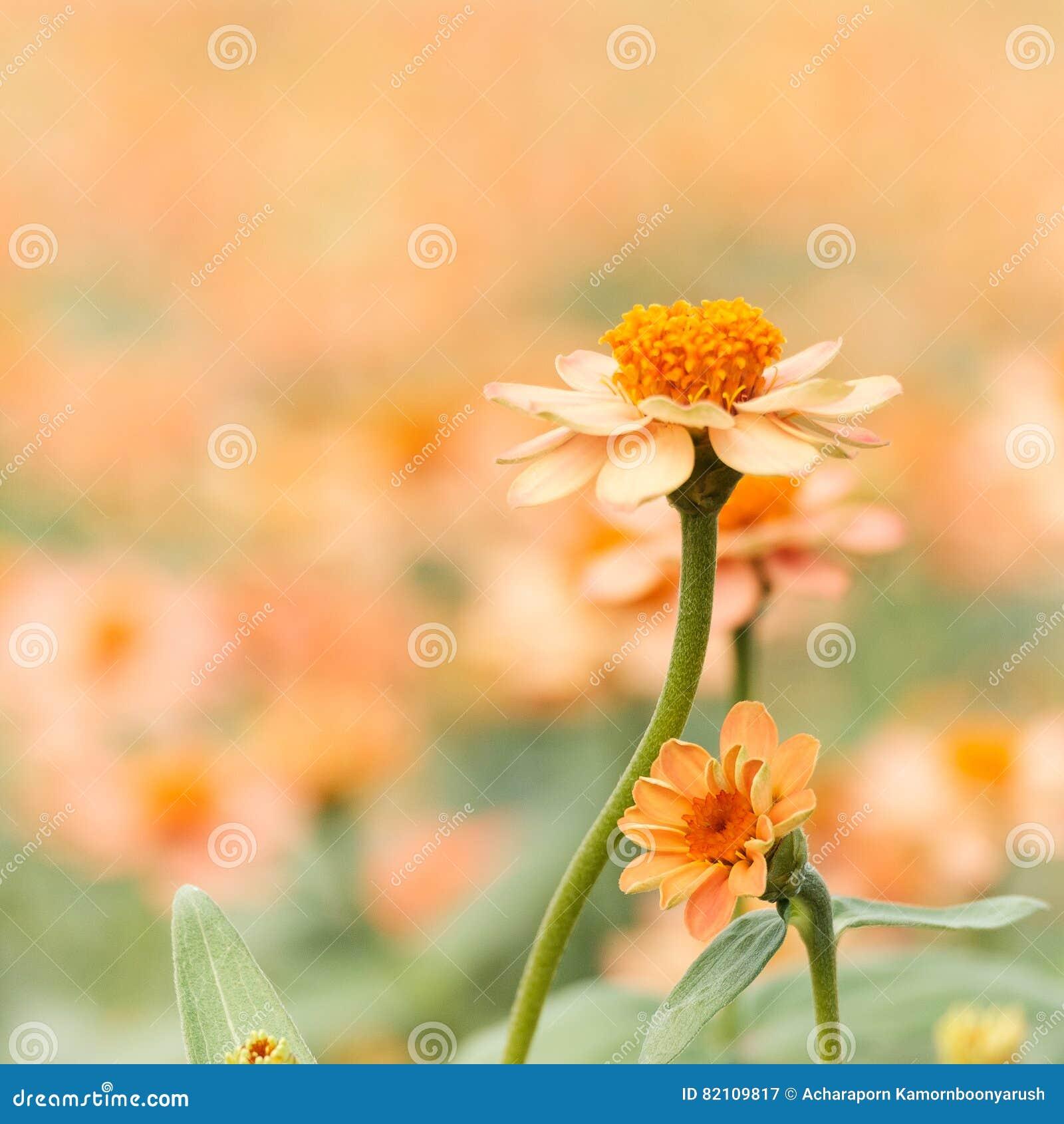 Oranje Bloem