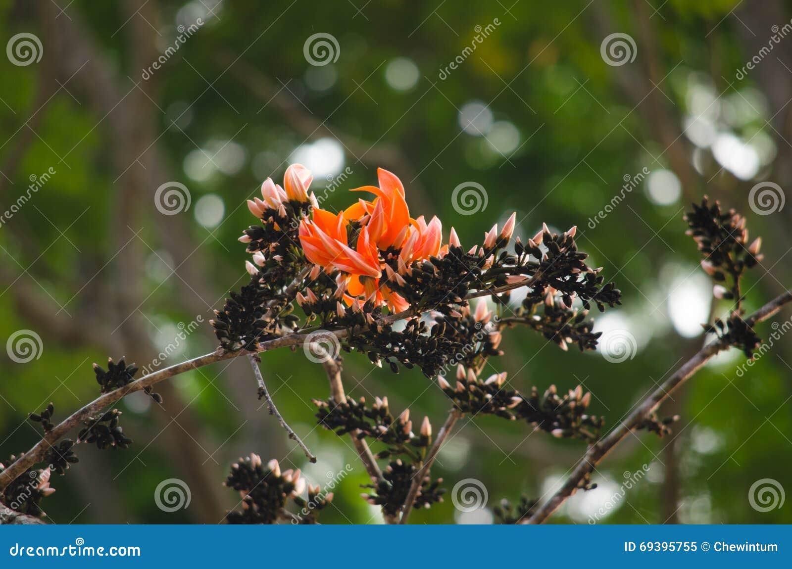 Oranje bloem in aard