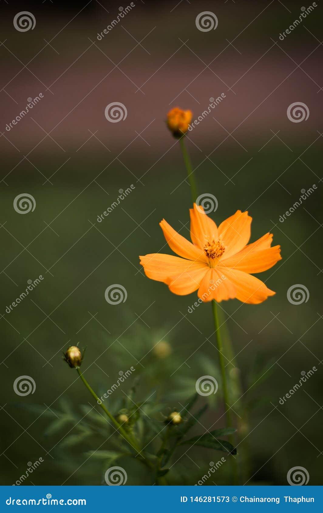 Oranje bloementribune uit prachtig