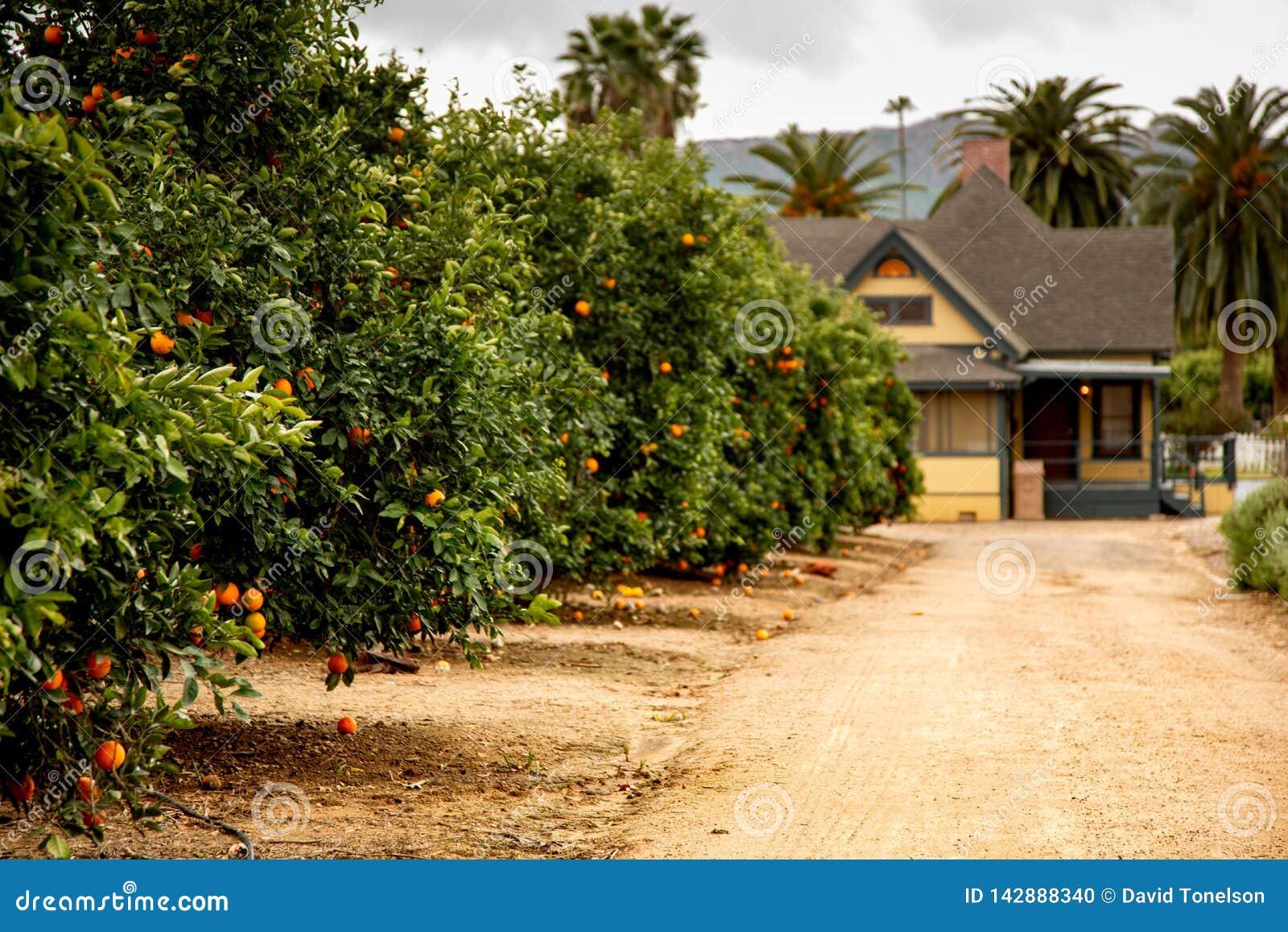 Oranje bosjes en een landbouwbedrijfhuis
