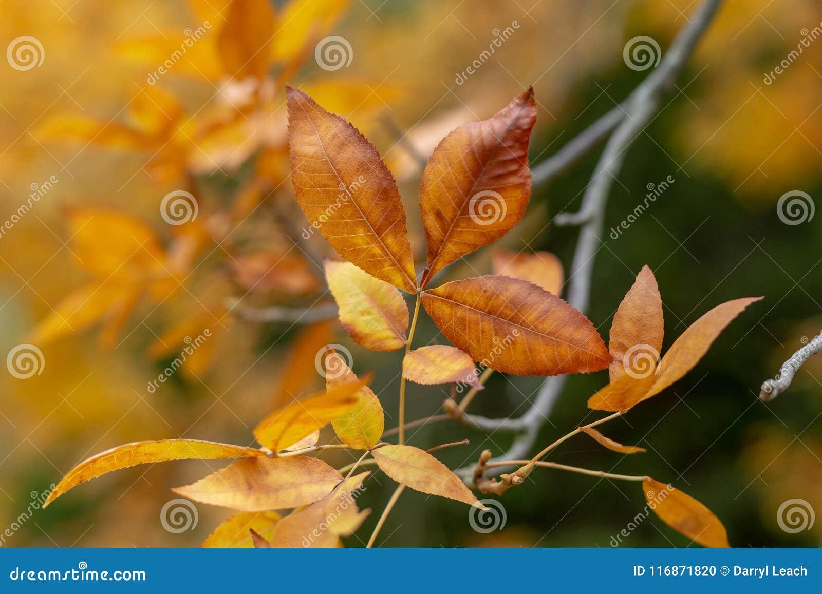 Oranje de Herfstbladeren met vage achtergrond bij Onderstel torenhoge sout