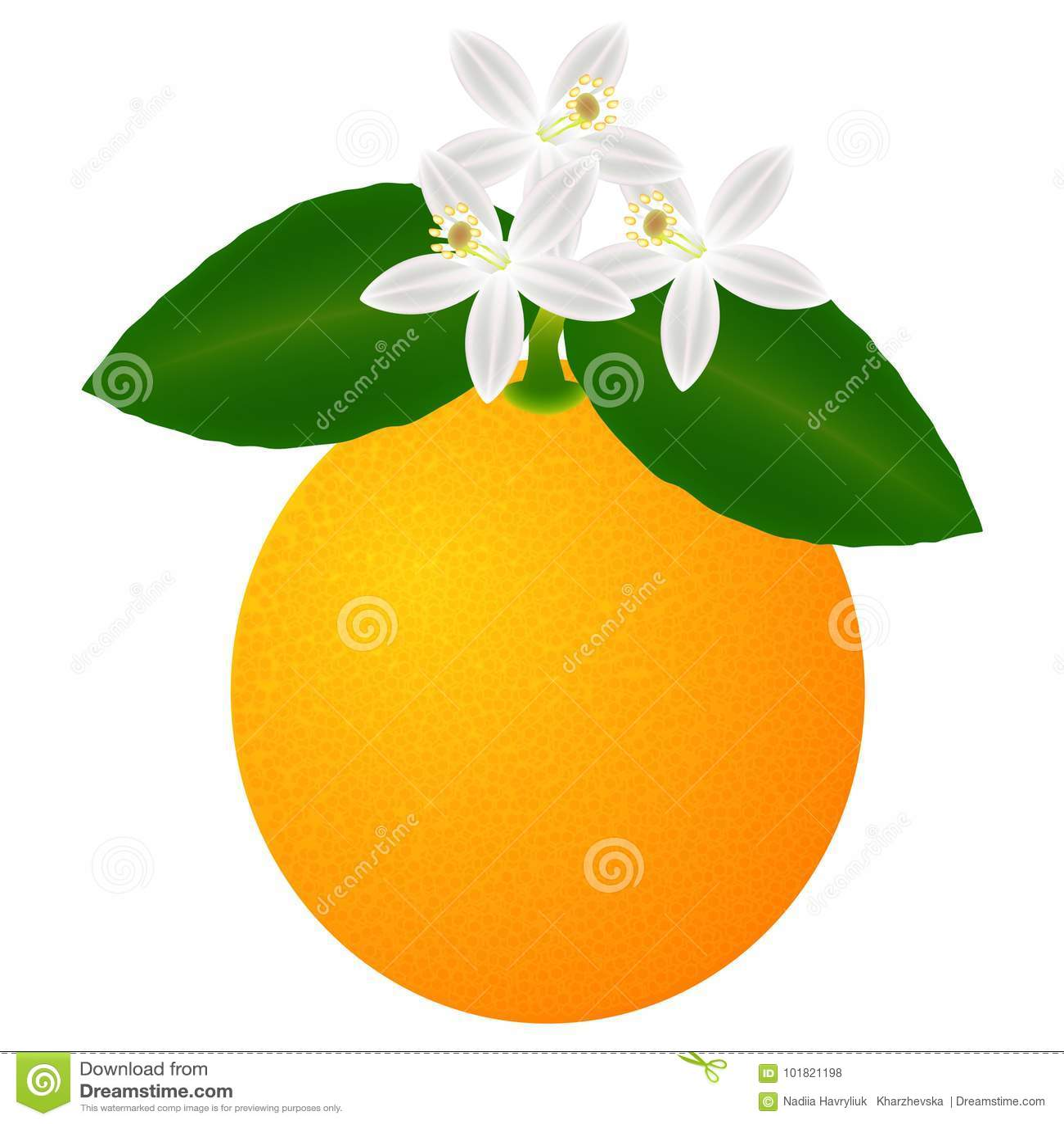 Oranje die fruit met bladeren en bloesem, op witte achtergrond worden geïsoleerd