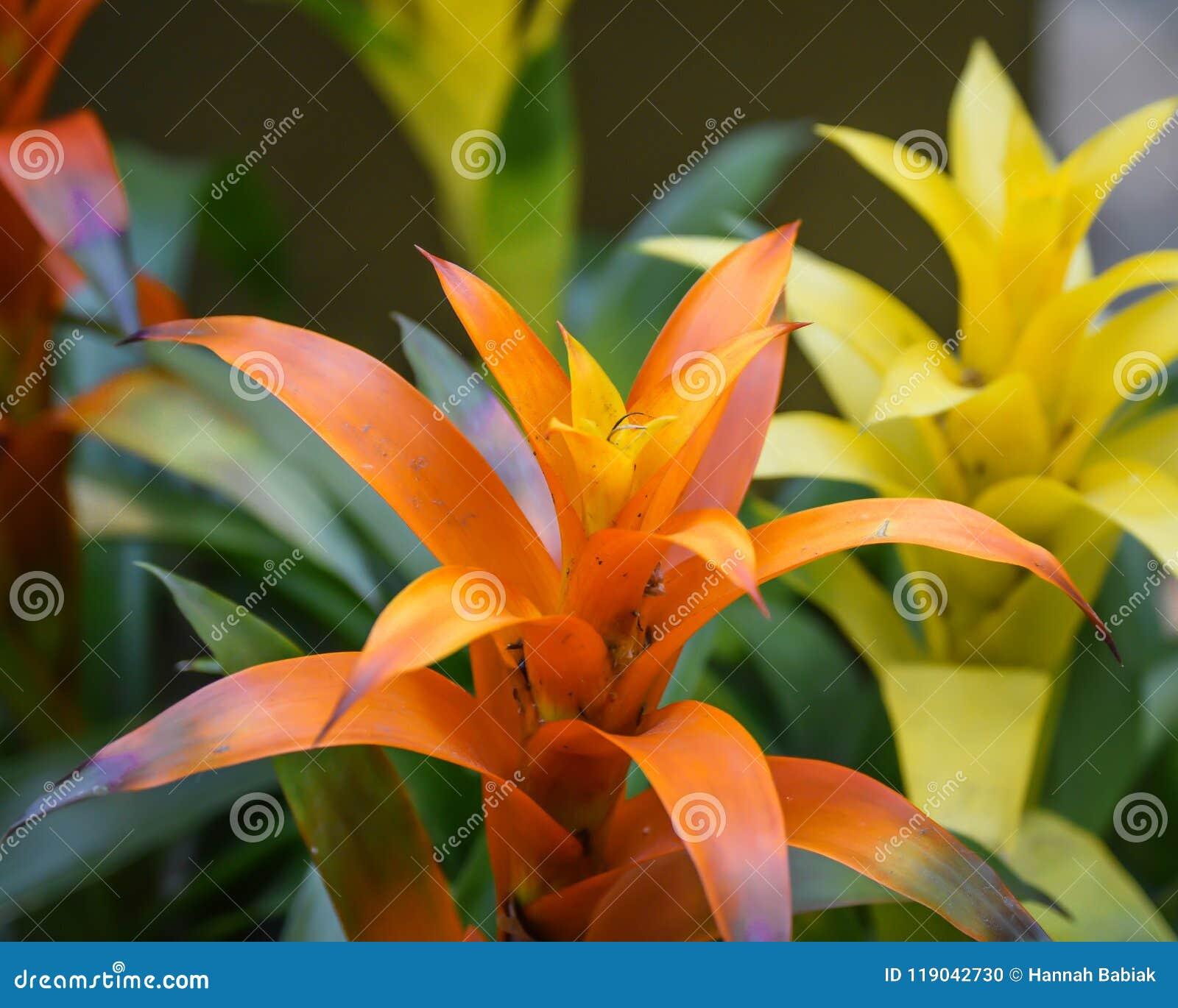 Oranje en gele tropische bloemen