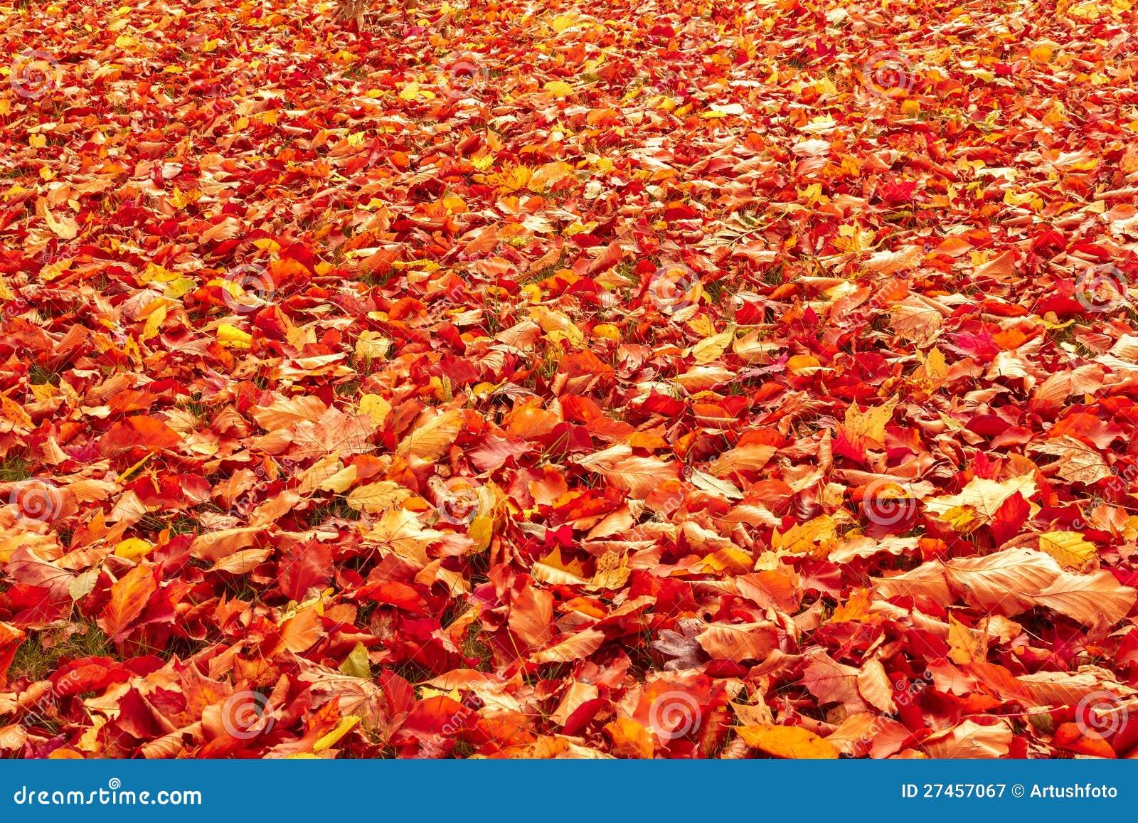 Oranje en rode de herfstbladeren van de daling op grond royalty ...