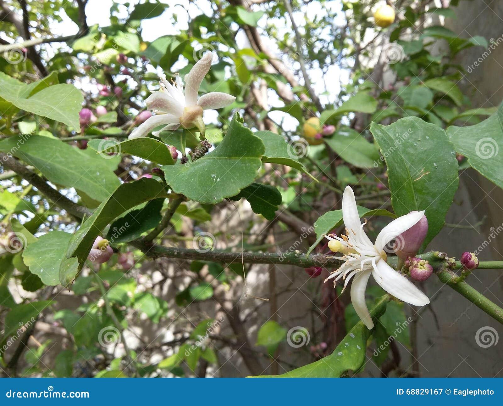 Oranje fruitbloemen op groene boom
