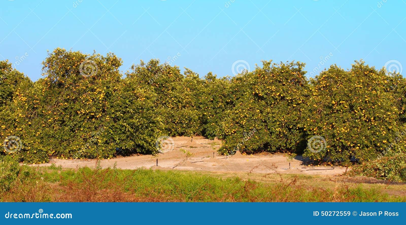 Oranje het Bosjepanorama van Florida