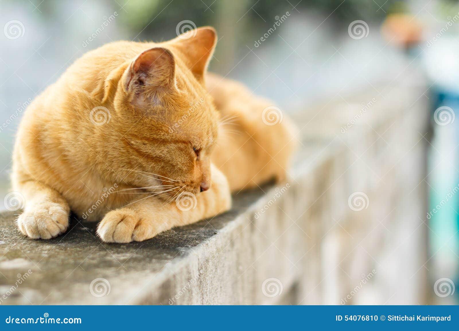 Oranje Kat