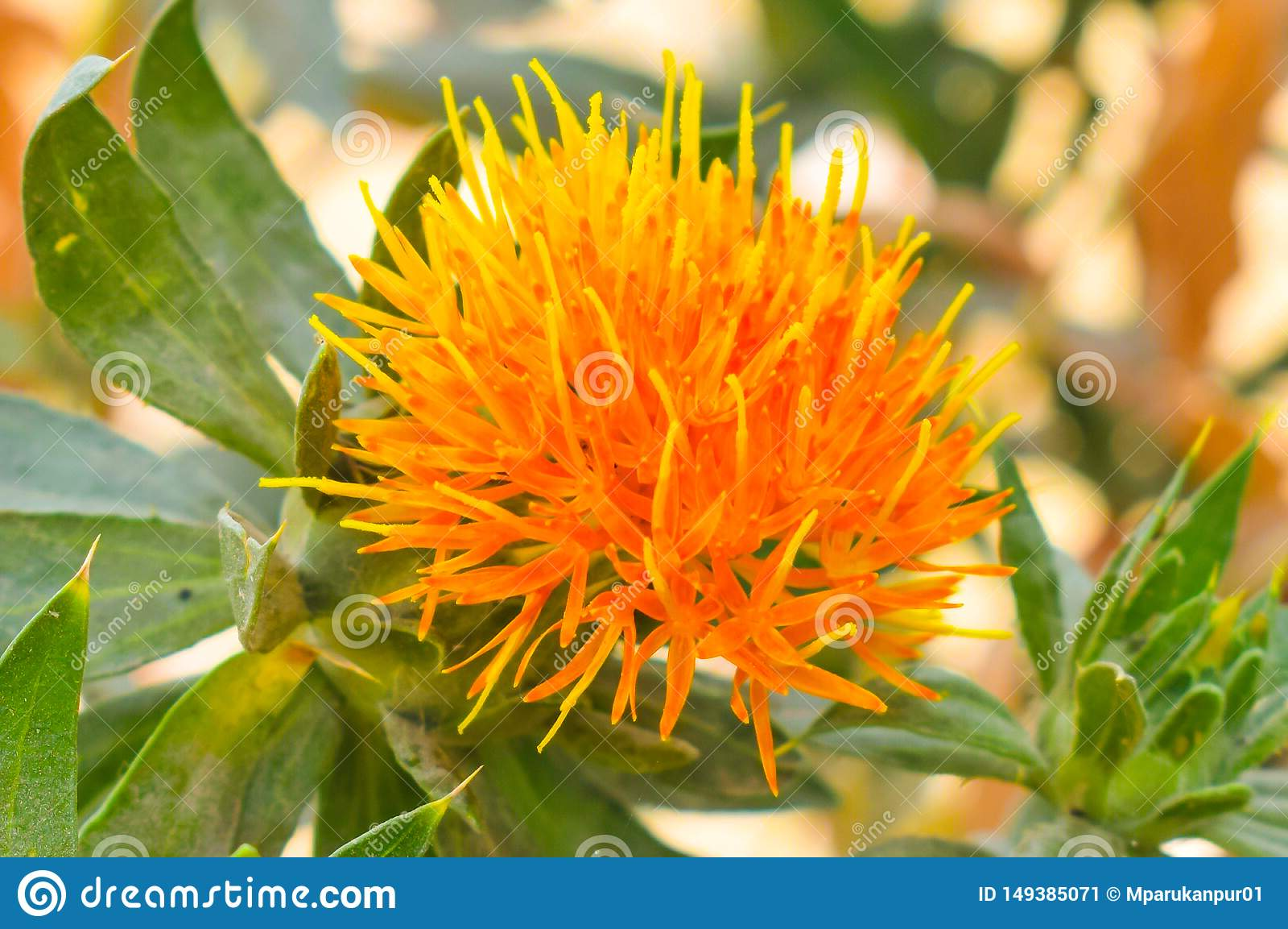 Oranje kleurenbloem met vage achtergrond