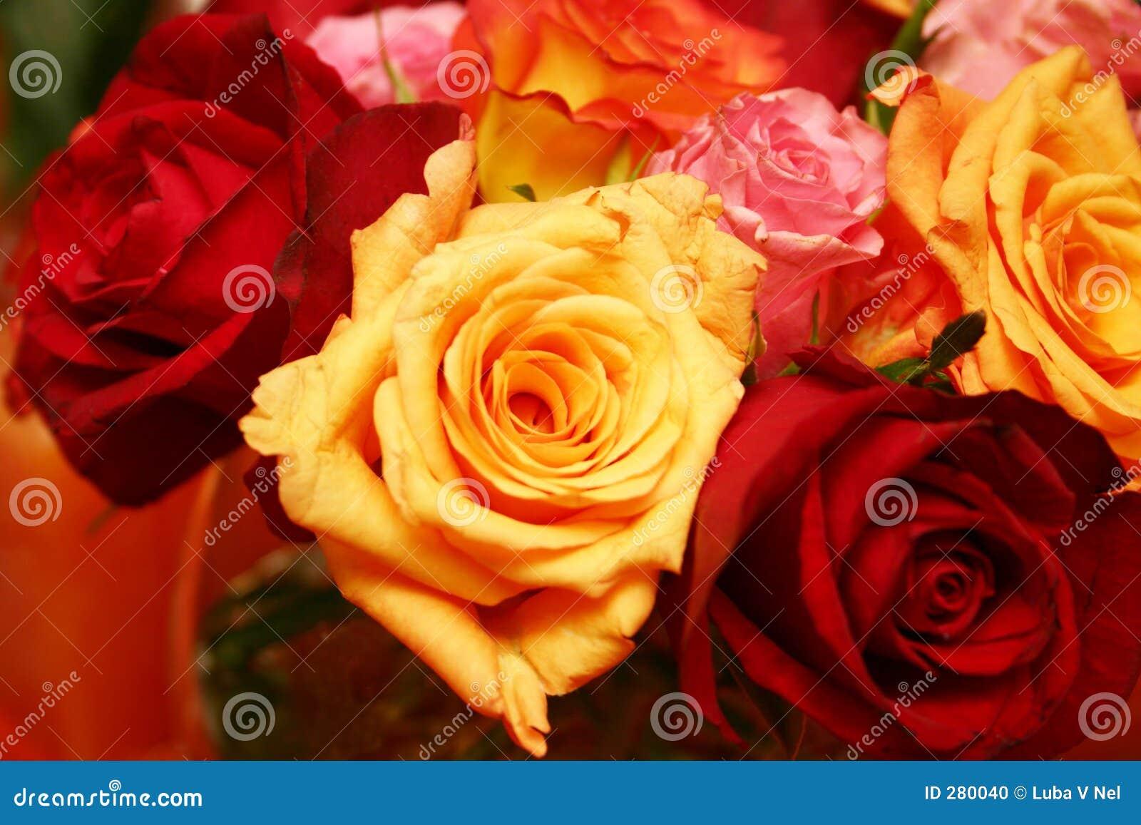 Oranje Thaise rozen 025