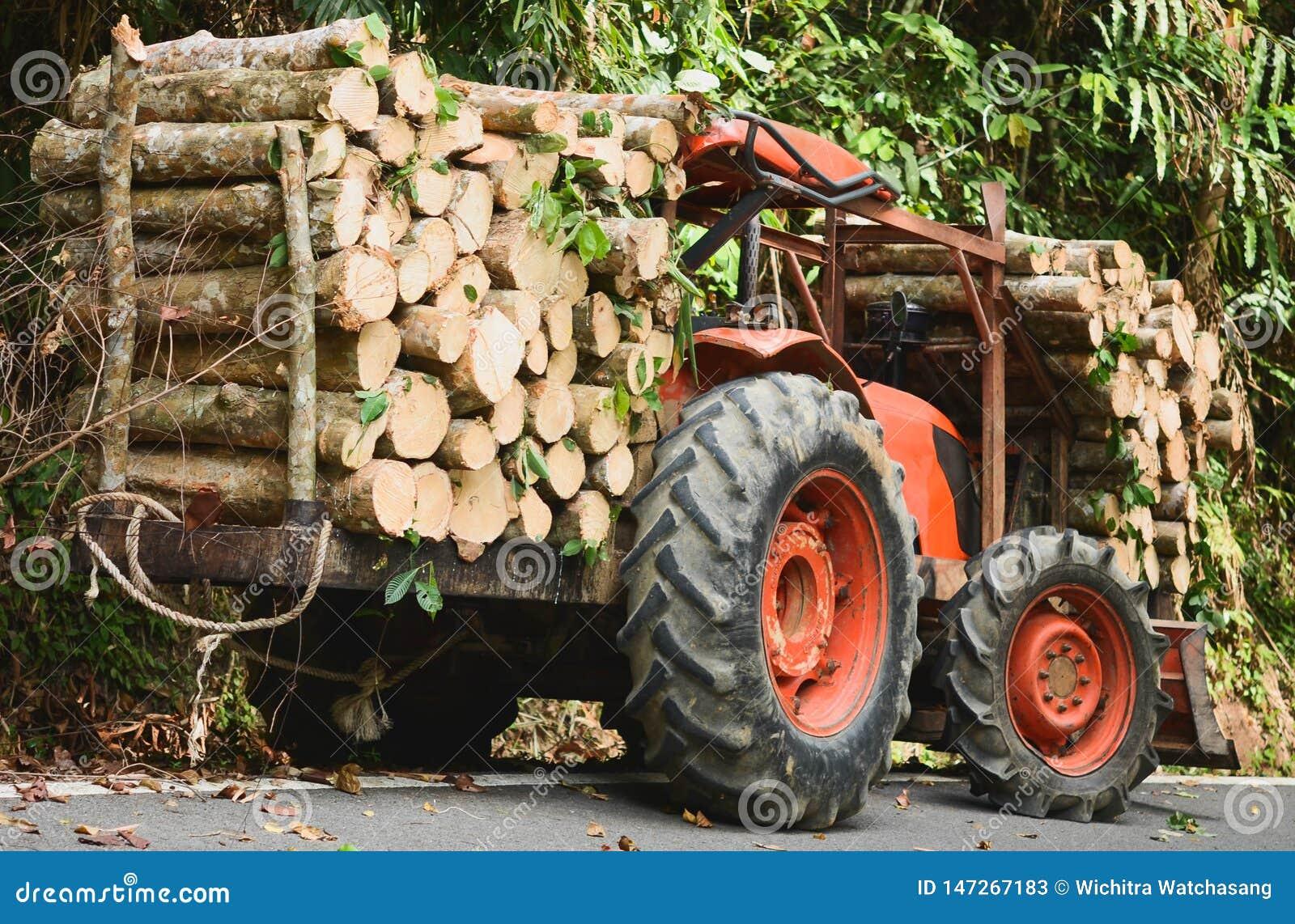 Oranje tractor of Vrachtwagenladingshout in bos, Verse houten gezaagd natuurlijk