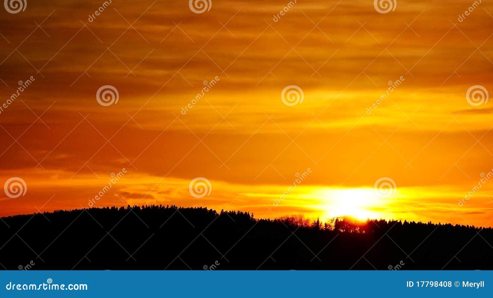 Oranje zonsondergangbos