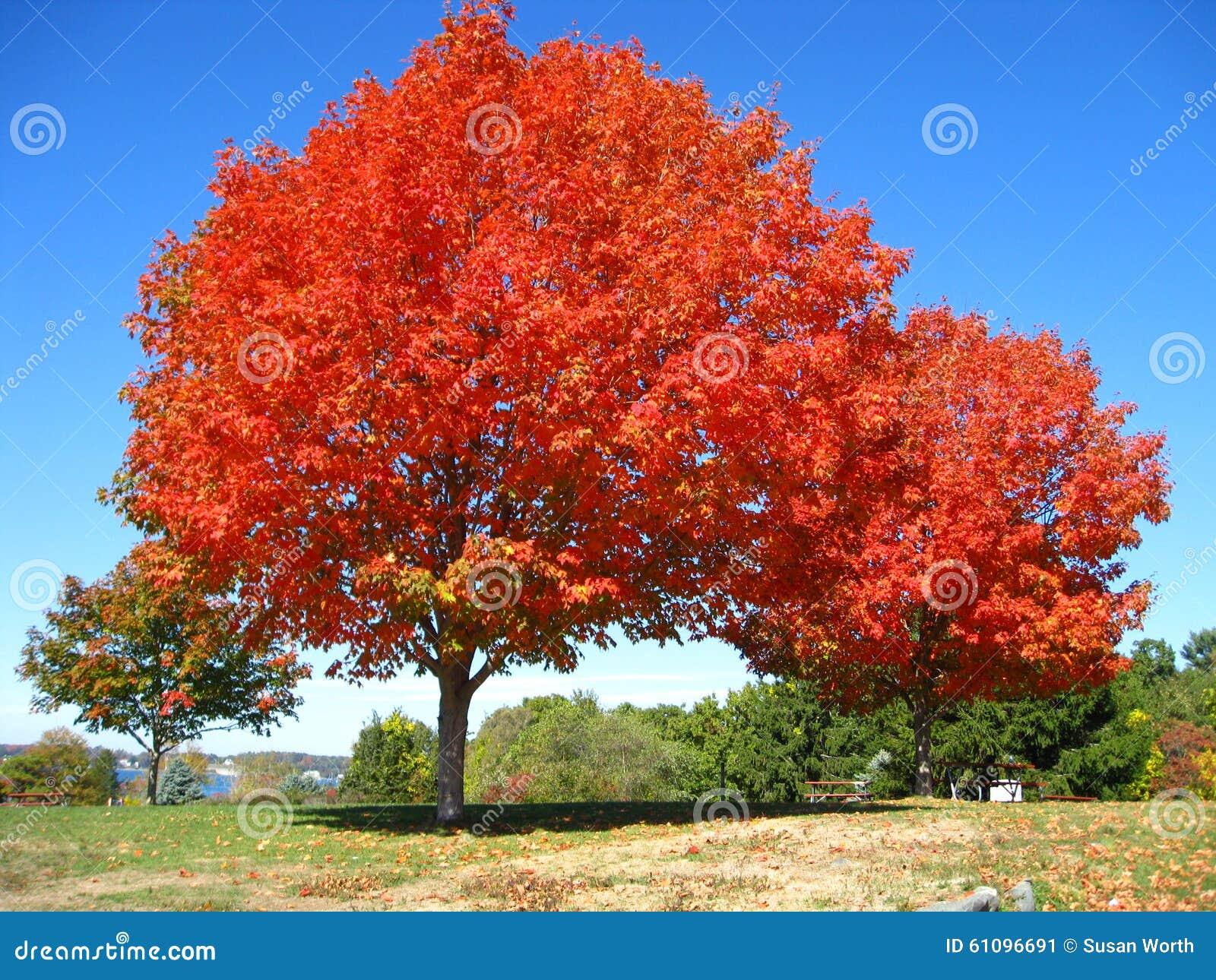 Oranjerood Autumn Trees Fall in Kittery Maine