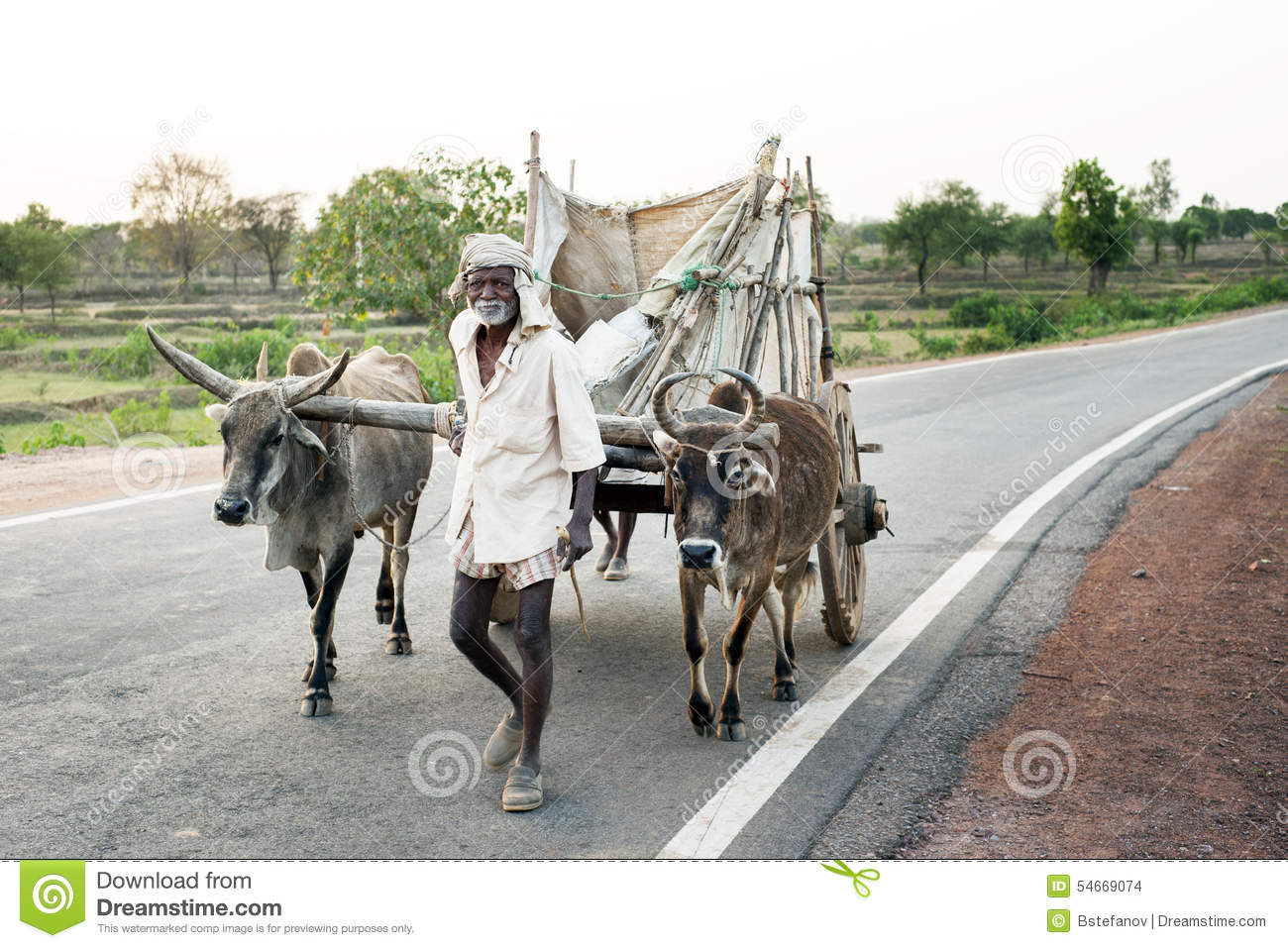 Orcha editorial stock image  Image of animal, cattle - 54669074