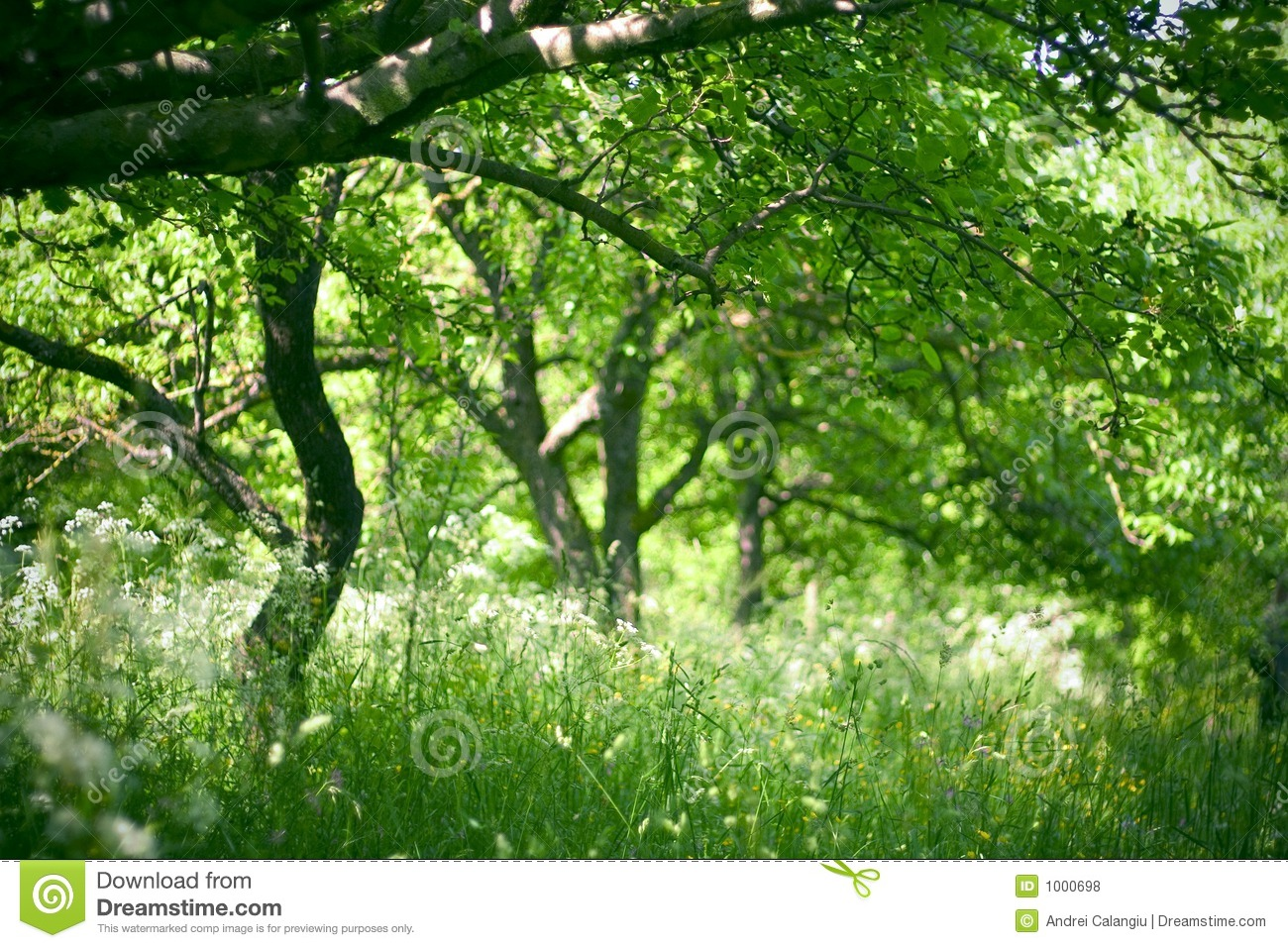 Download Orchard in the morning stock photo. Image of green, agriculture - 1000698