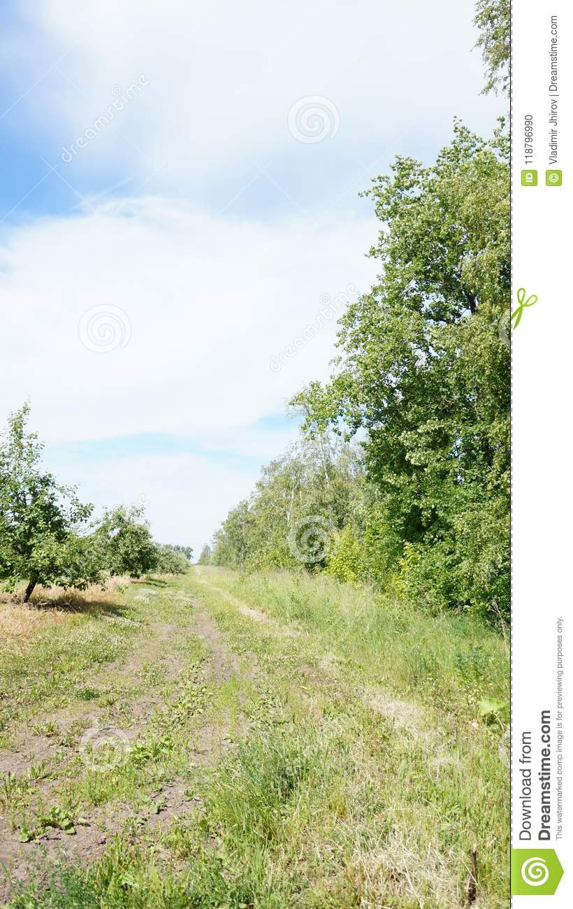 Orchard and path