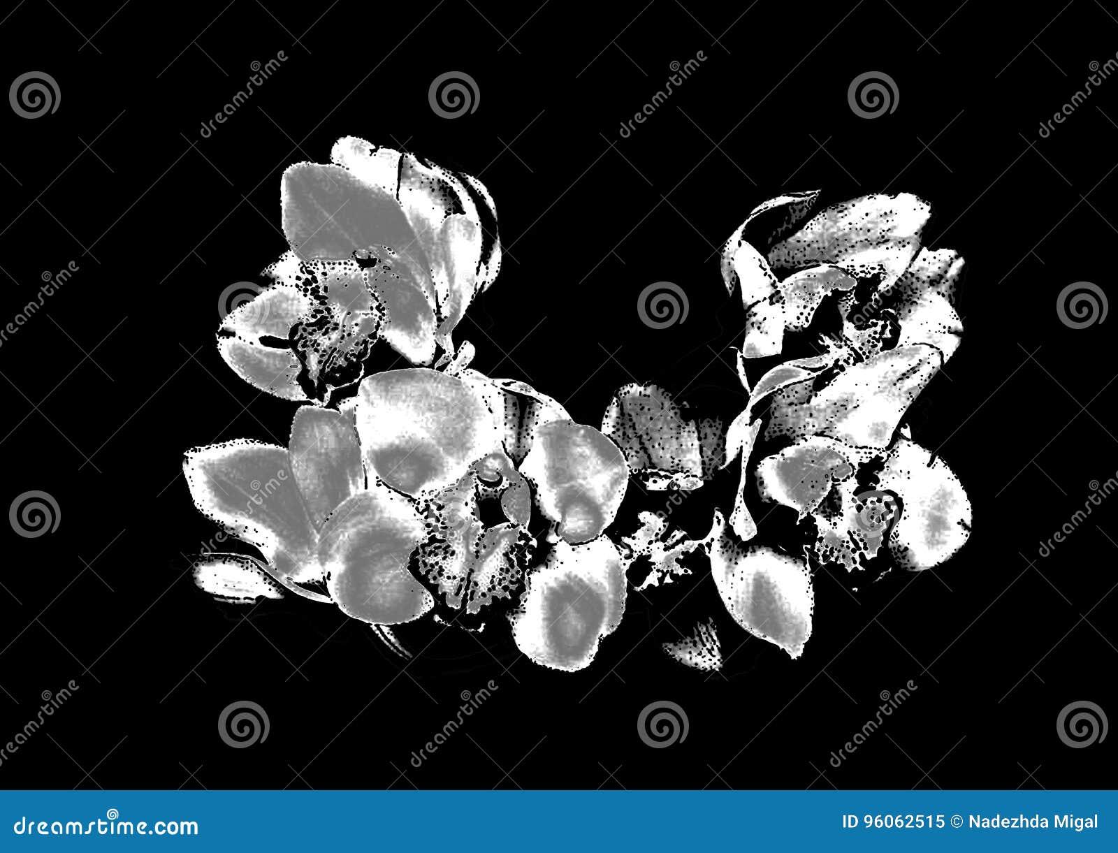 Orchidée argentée