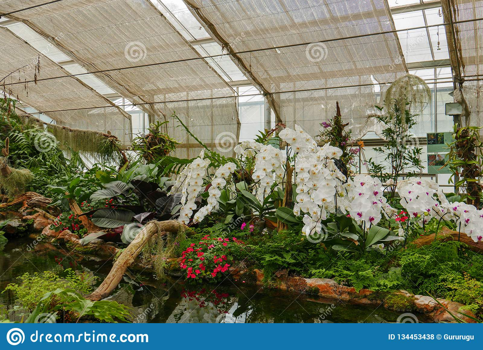 Orchidée Blanche Dans Le Jardin Tropical Dans La Serre Photo ...