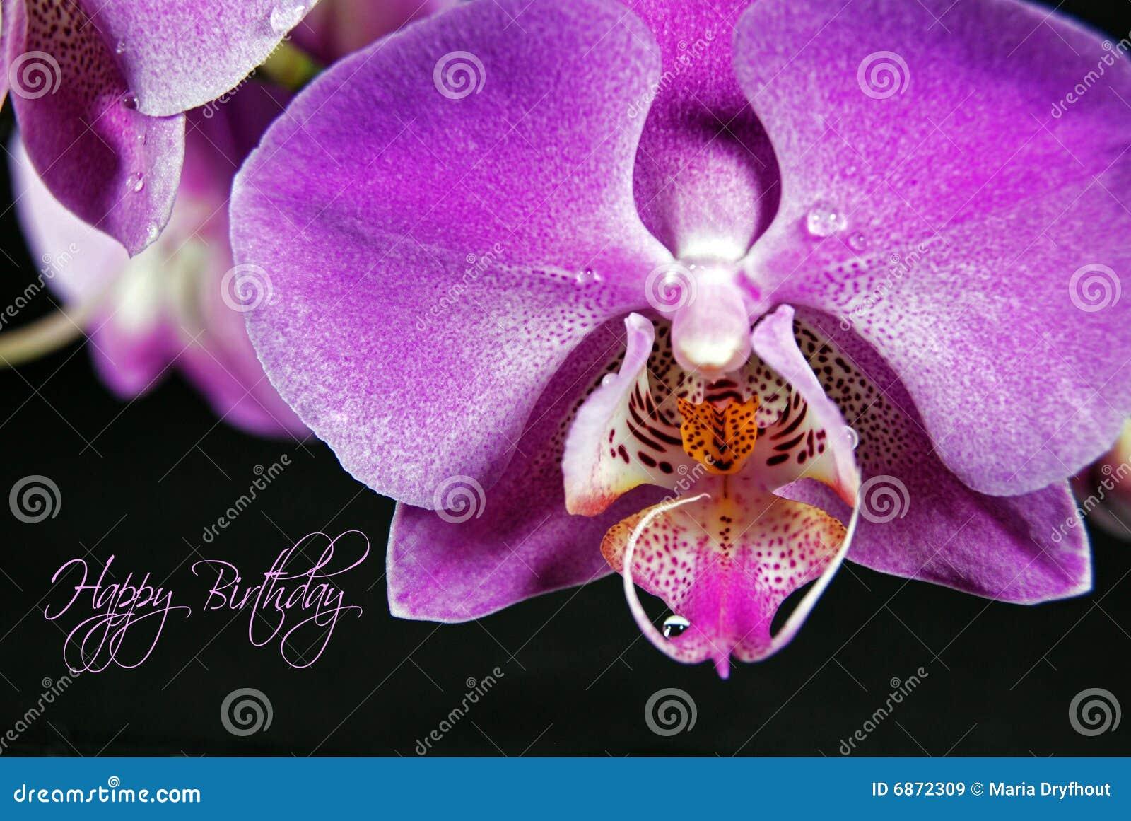Orchidee D Anniversaire Image Stock Image Du Gouttelette 6872309